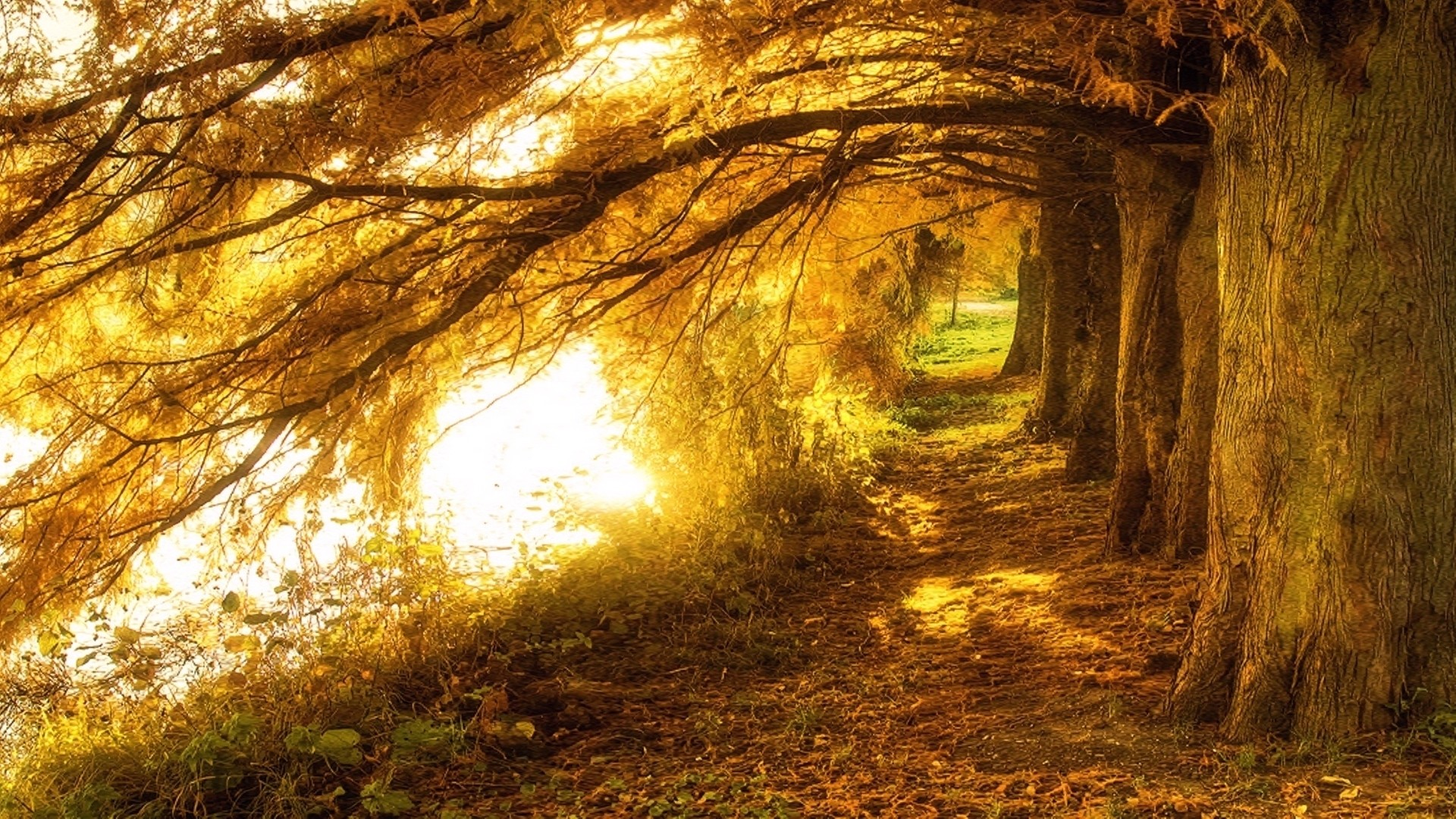 Forests: Beautiful Fall Forest Light Trees Autumn Sunlight Pretty ...