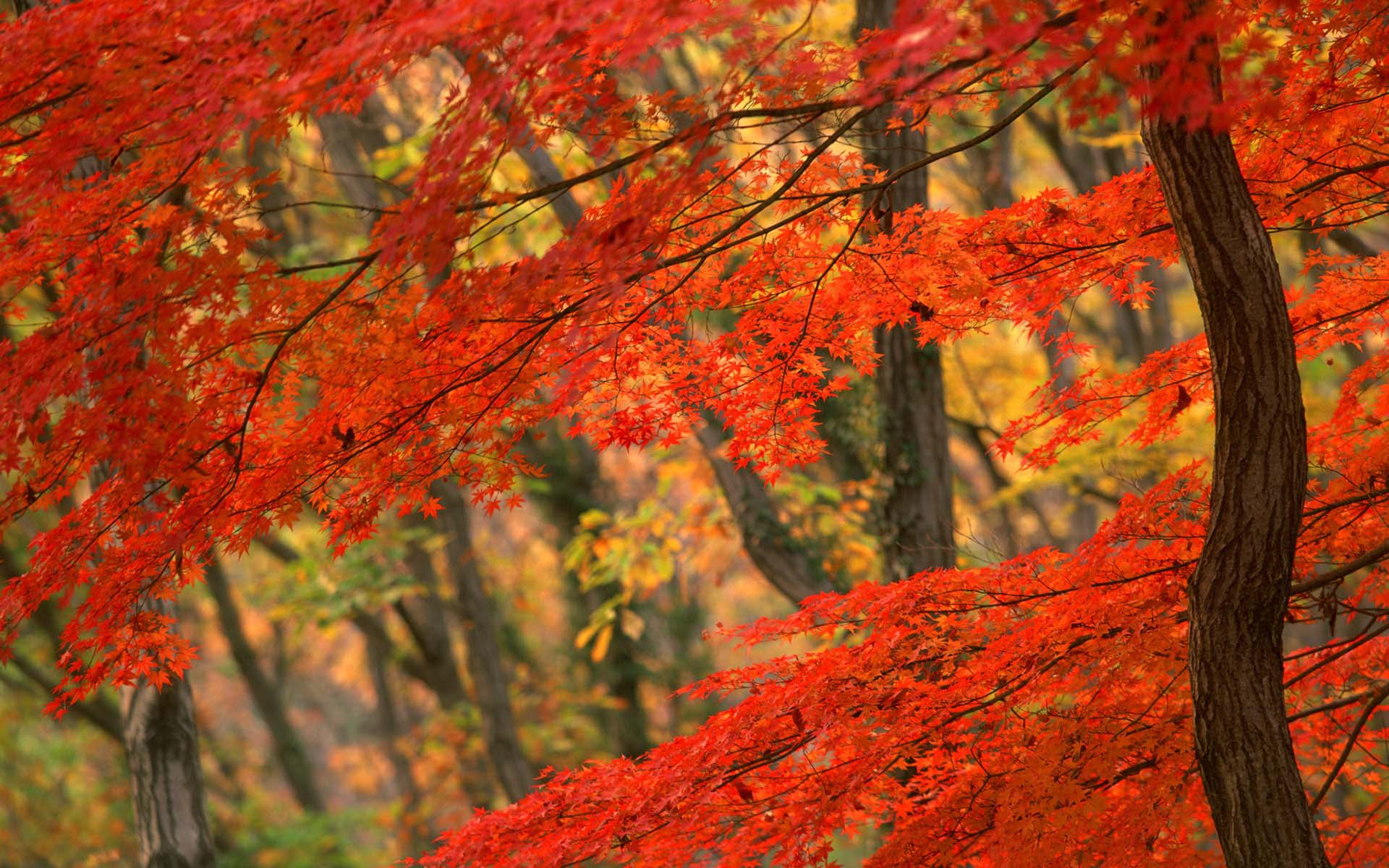 Autumn beauty photo