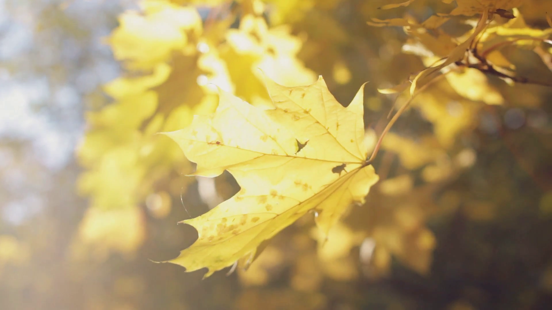 Autumn beauty, colourful leaves close-up Stock Video Footage ...