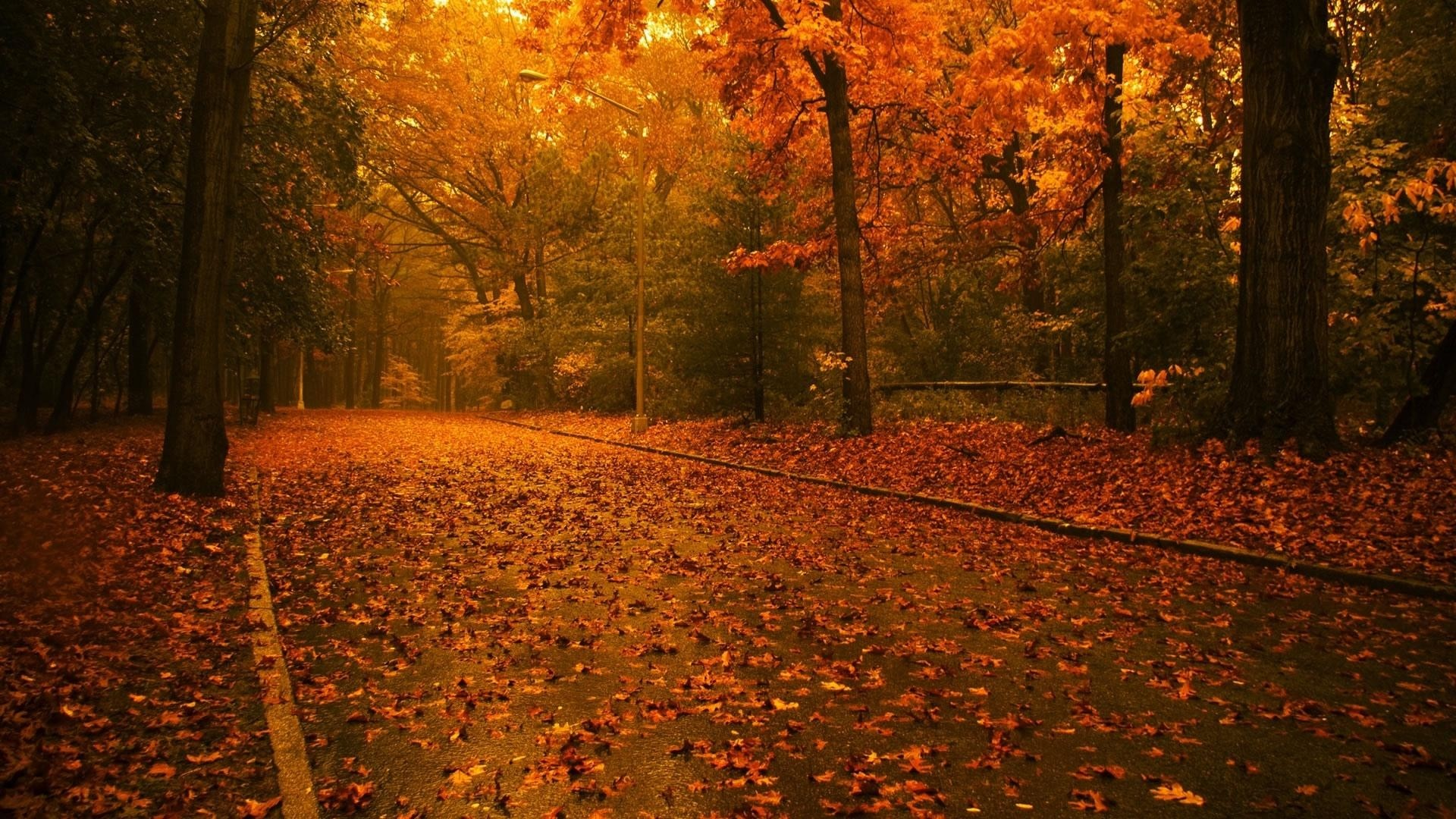 Forest Autumn Beauty Trees Fall Nature Beautiful Forests Wallpapers ...