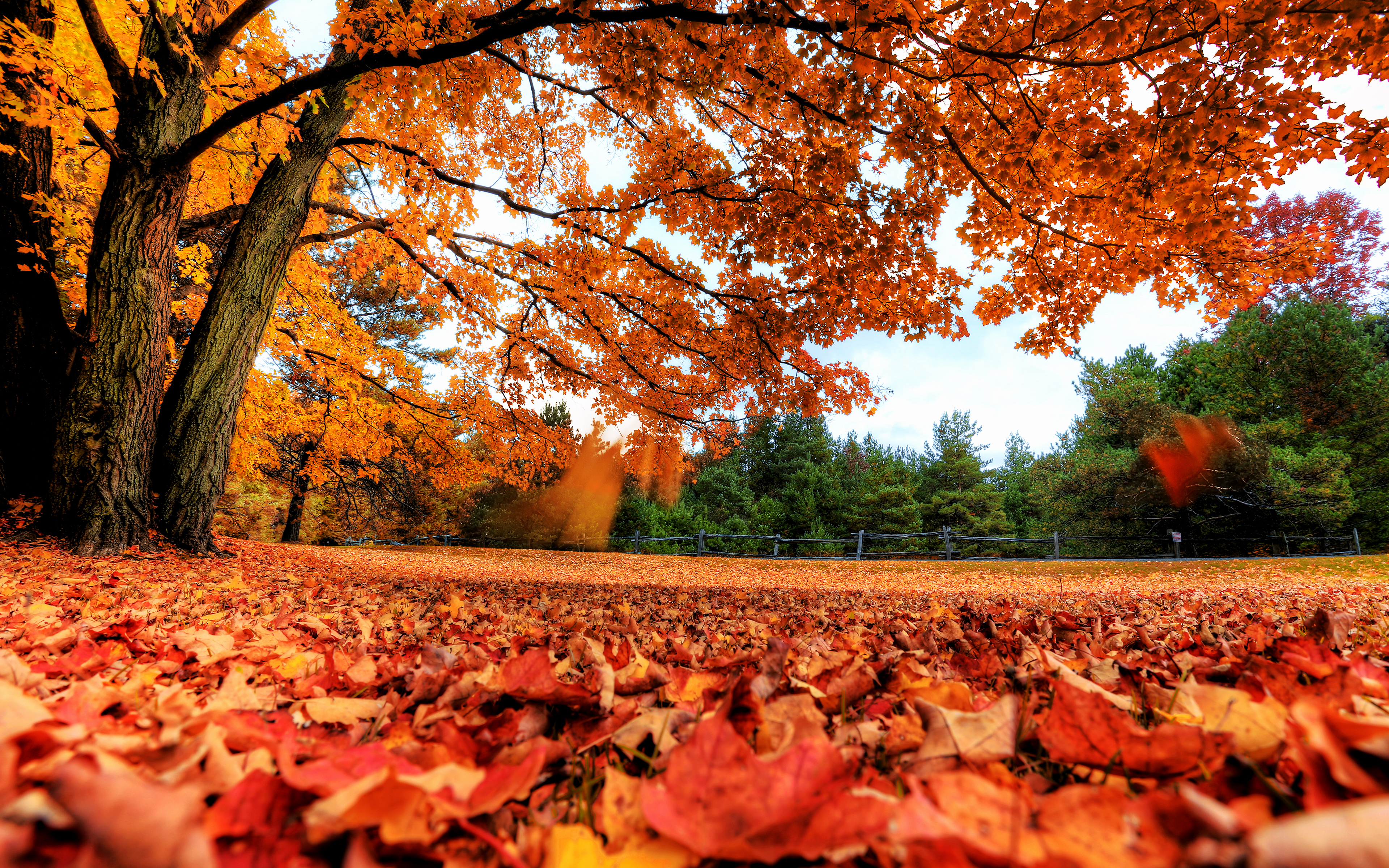 Beauty of autumn nature wallpapers and images - wallpapers, pictures ...