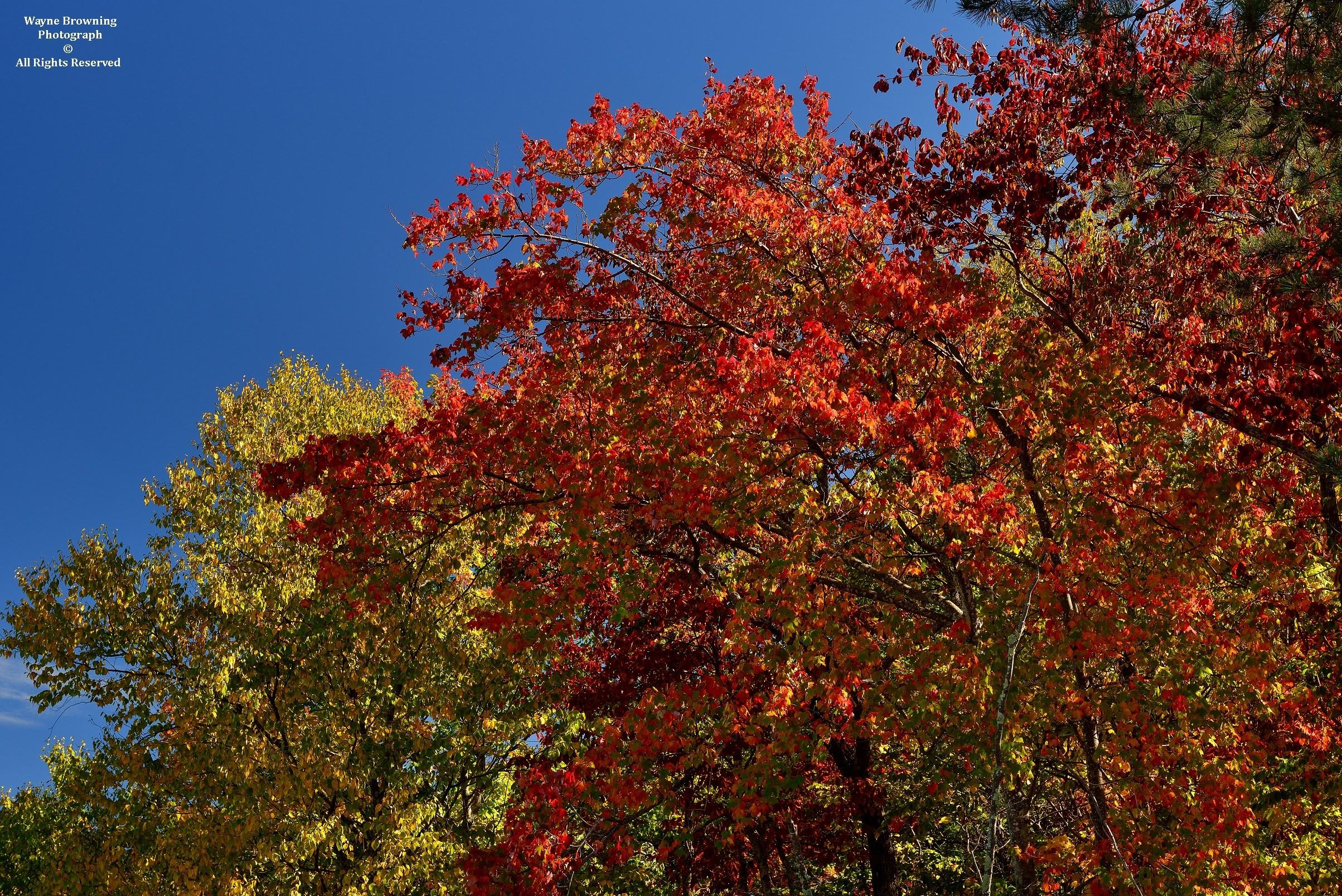 Autumn 2017 Color | Appalachian Climate Center