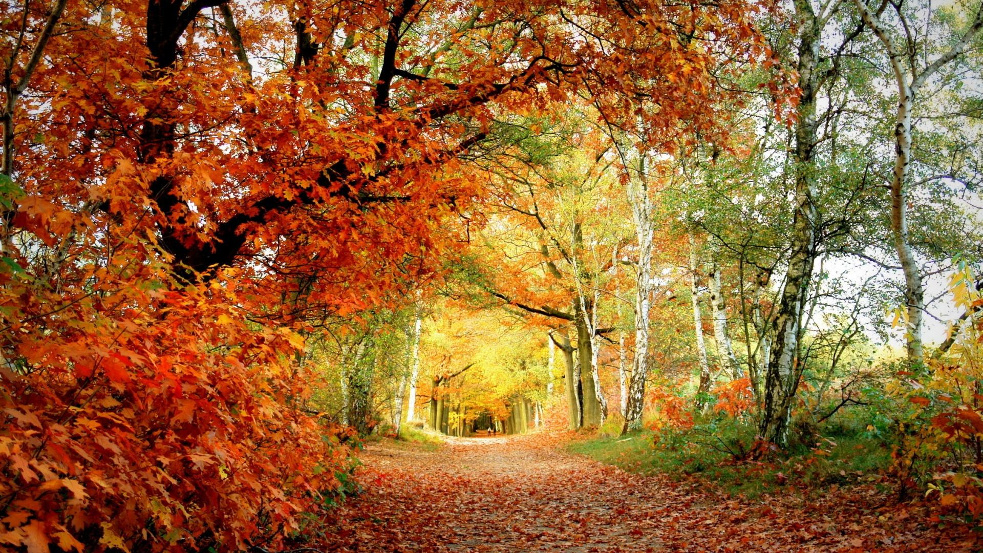 Free 1920x1080 Autumn Beauty Wallpapers Full HD 1080p Backgrounds