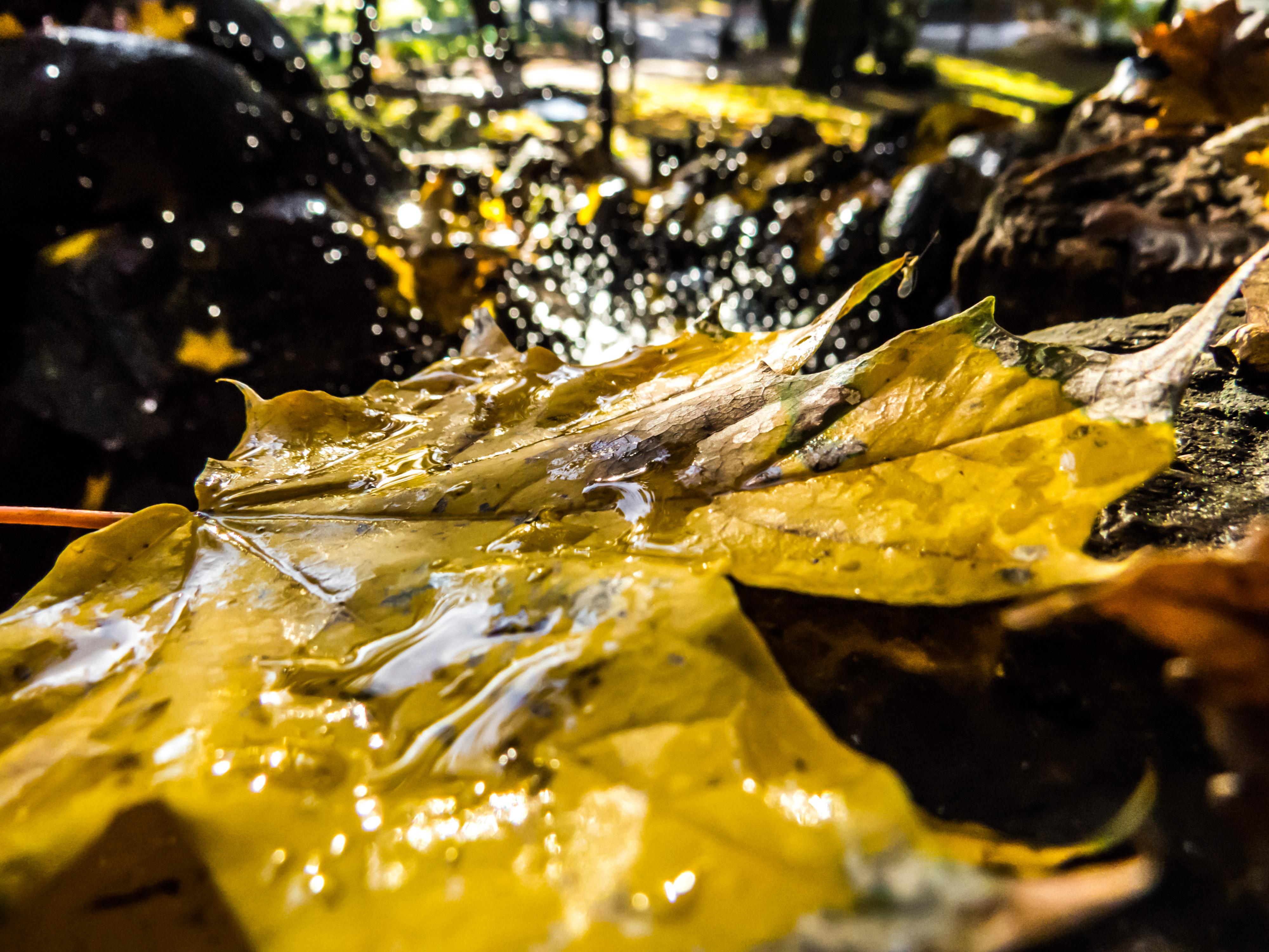 Autumn beauty, Rock, Water, Vivid, Trees, HQ Photo