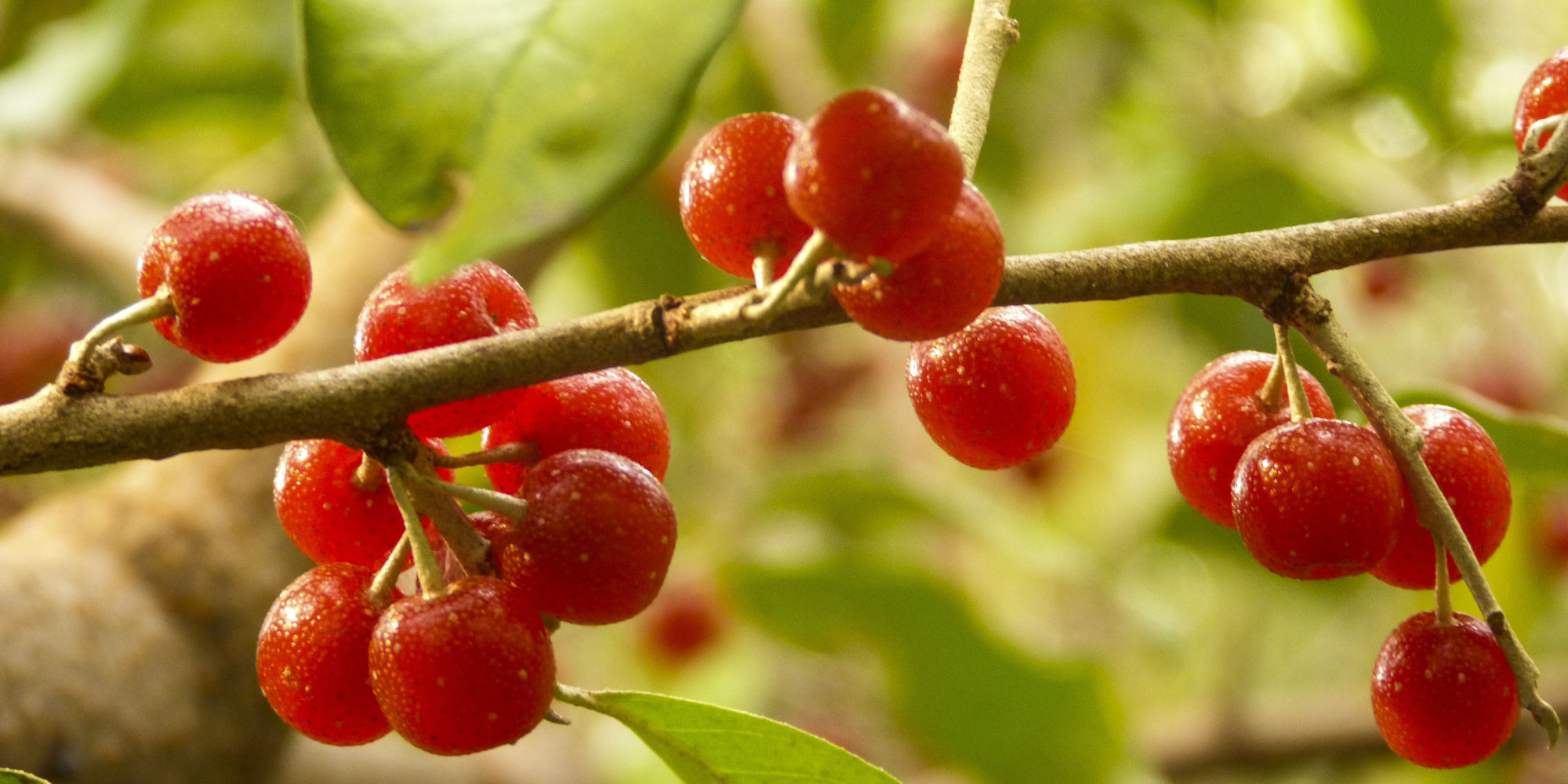 Eat The Enemy: How Eating Autumn Berries Can Help The Environment ...