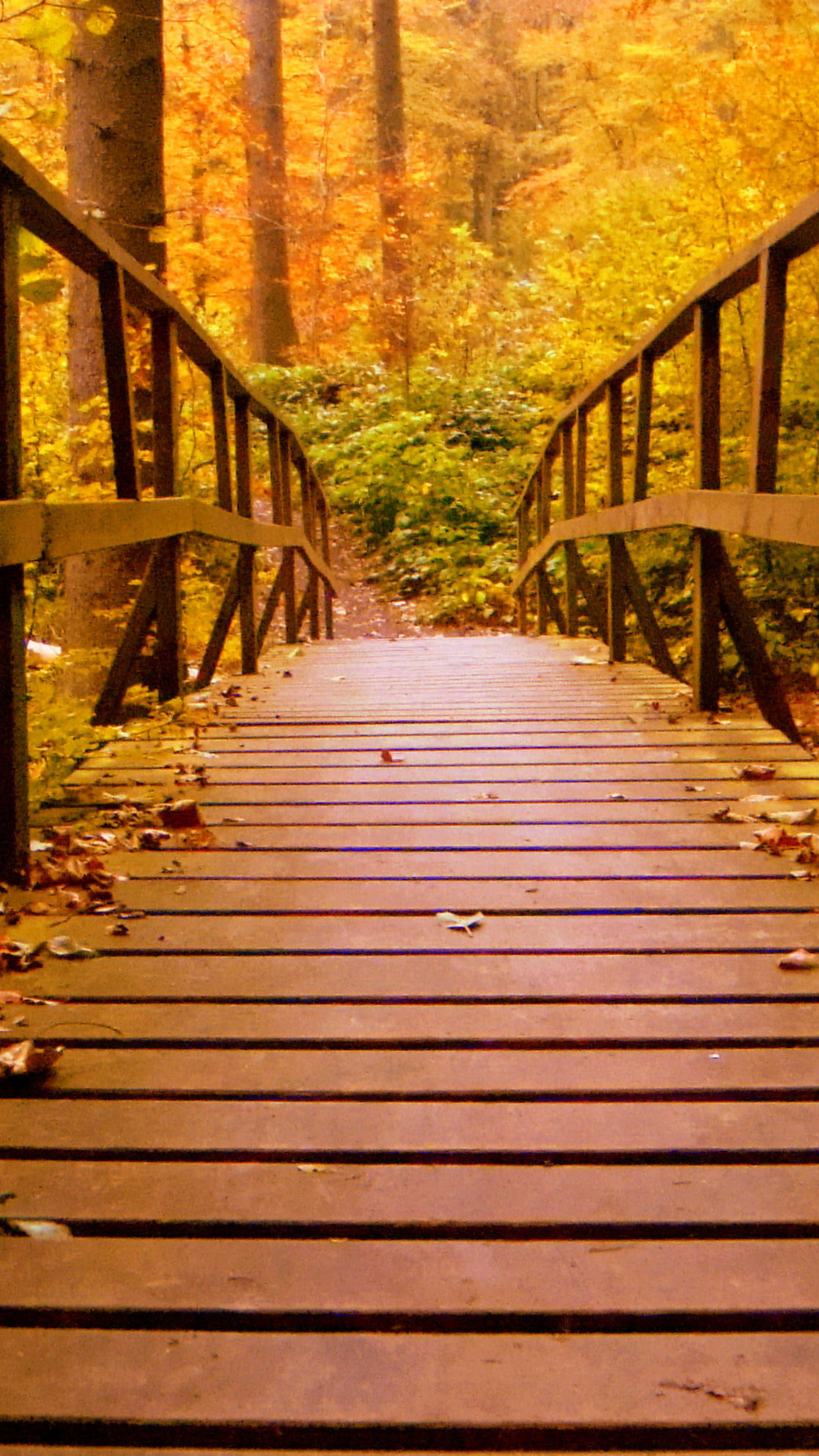 Autumn boardwalk bridge photo