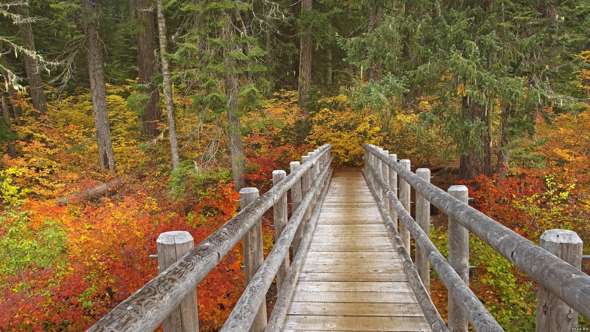 Bridges: Mckenzie River Trail Bridge Oregon Autumn Forest Wooden ...