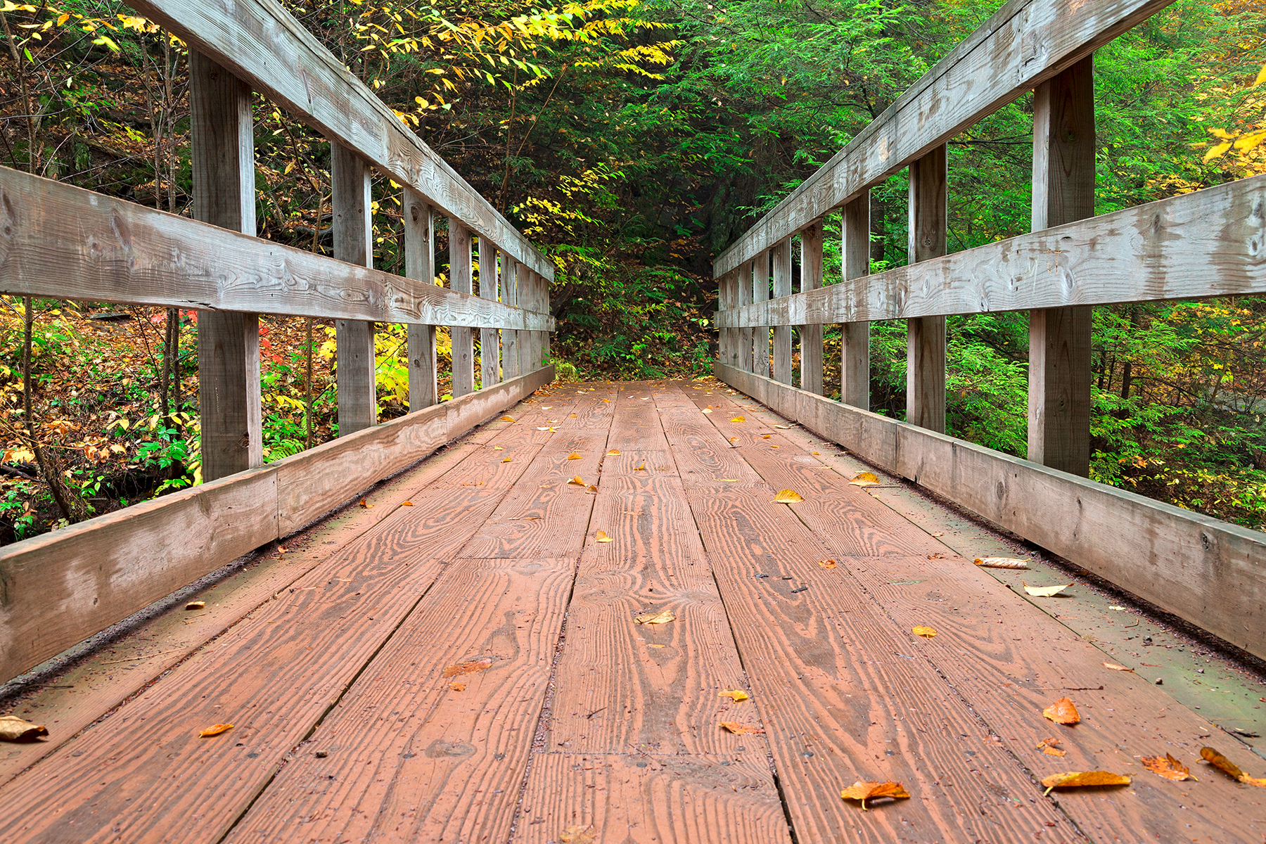 Autumn boardwalk bridge - hdr photo