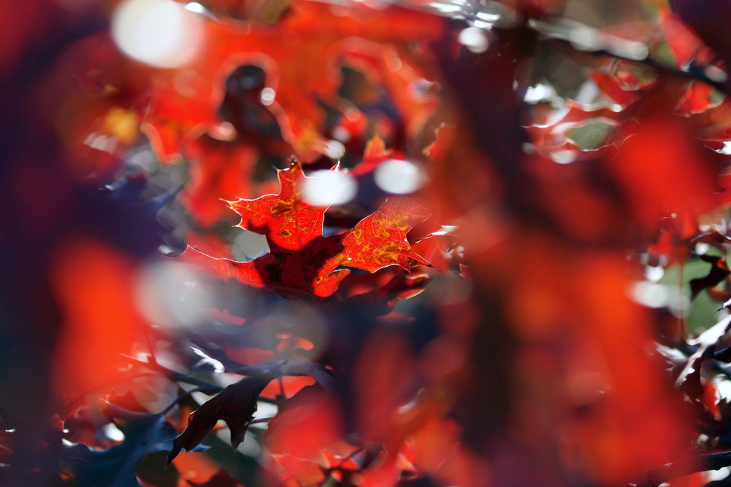 Autumn colors photo