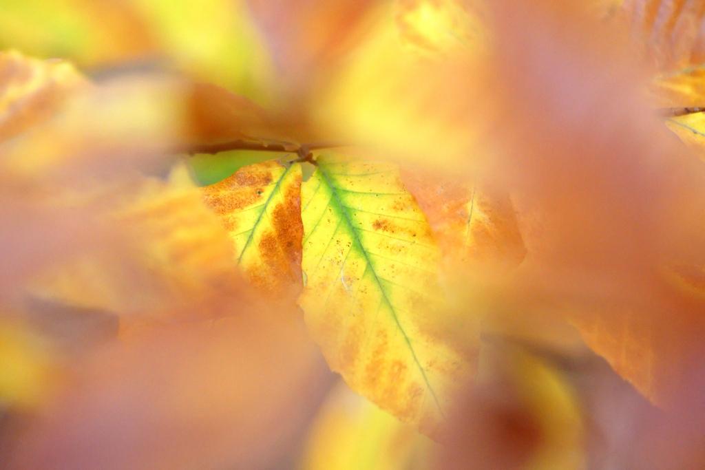 Autumn colors, Autumn, Natural, Turning, Tree, HQ Photo