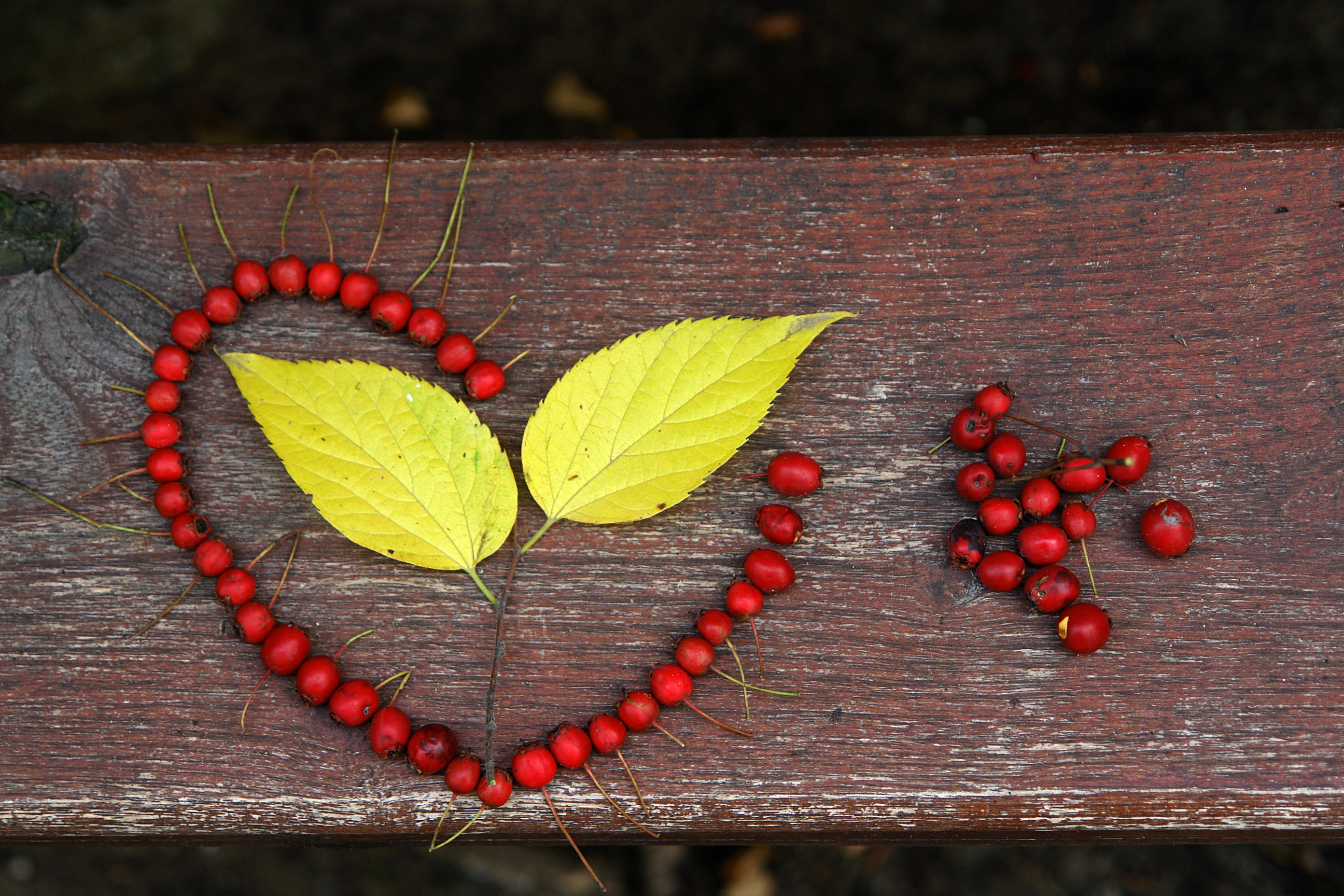 Autumn composition, Abstract, Autumn, Bench, Berry, HQ Photo