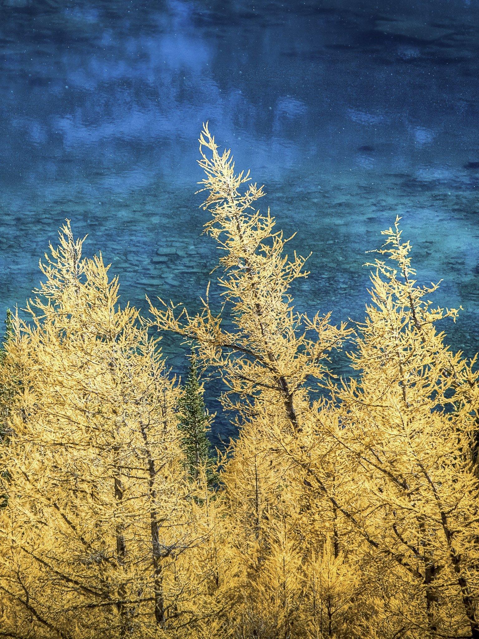 Wallpaper - Autumn Contrast - Paul Zizka Photography