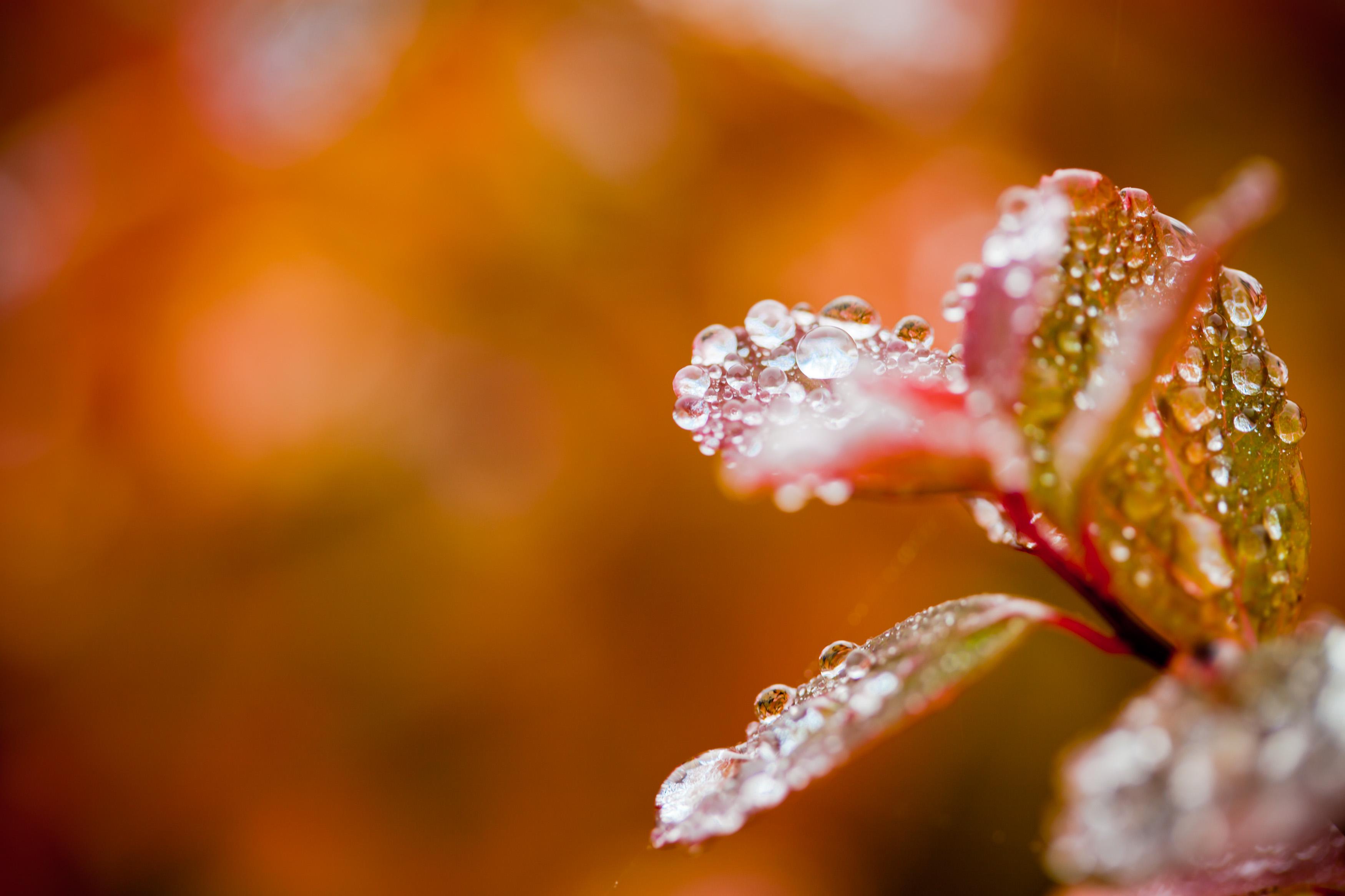 Droplets on autumn foliage photo