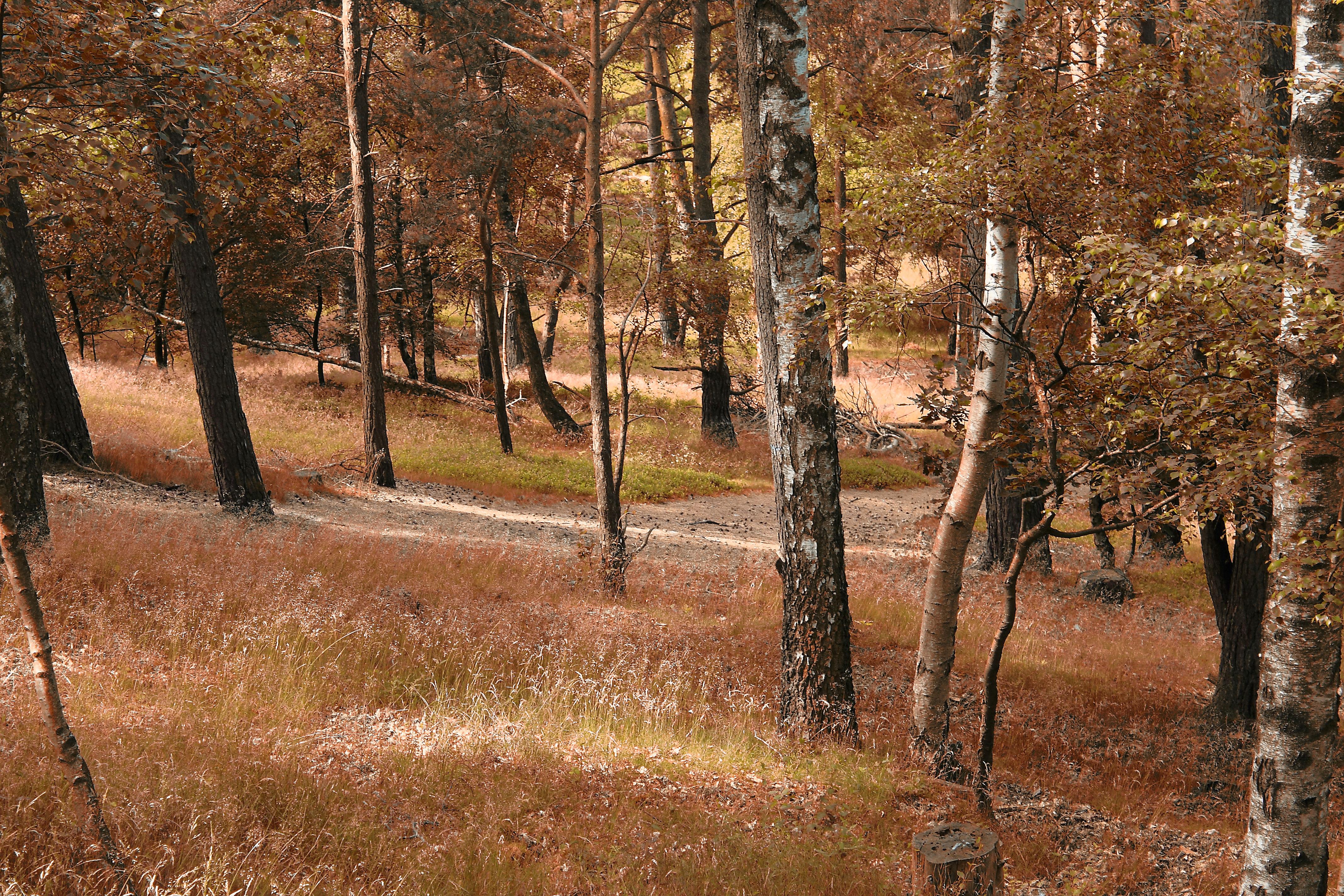 Autumn Forest, Autumn, Forest, Plants, Seasonal, HQ Photo