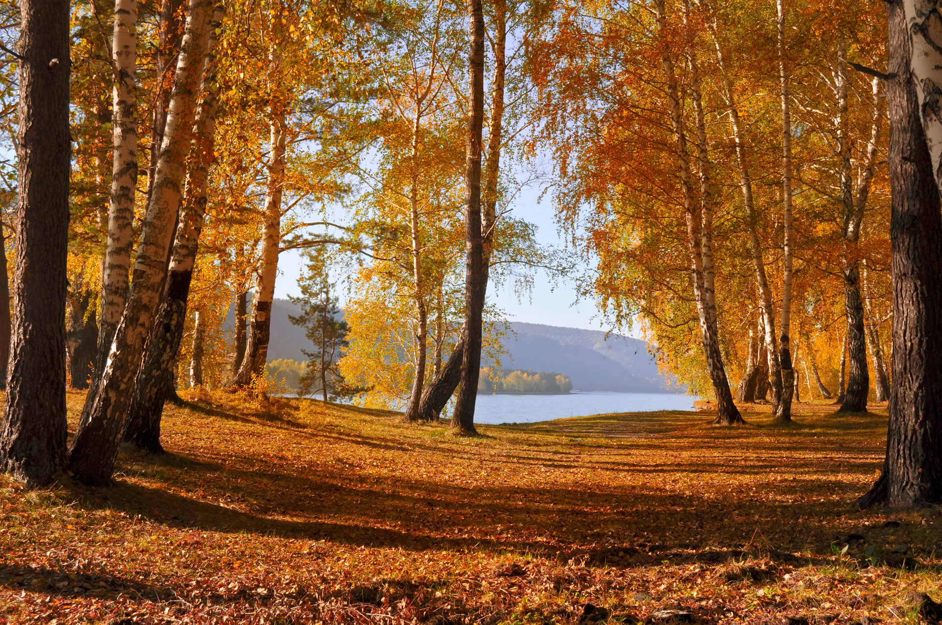 Autumn Forest Free Stock Photo - Public Domain Pictures