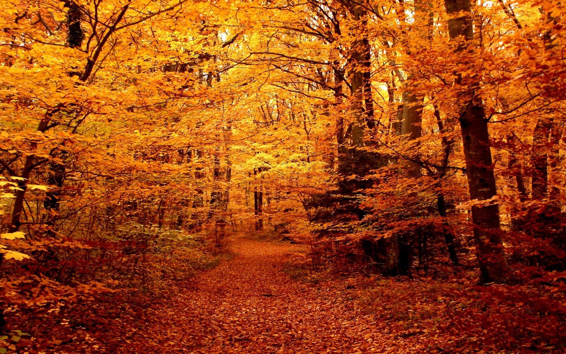 autumn path | HD Autumn Forest Path Wallpaper | Autumn | Pinterest ...