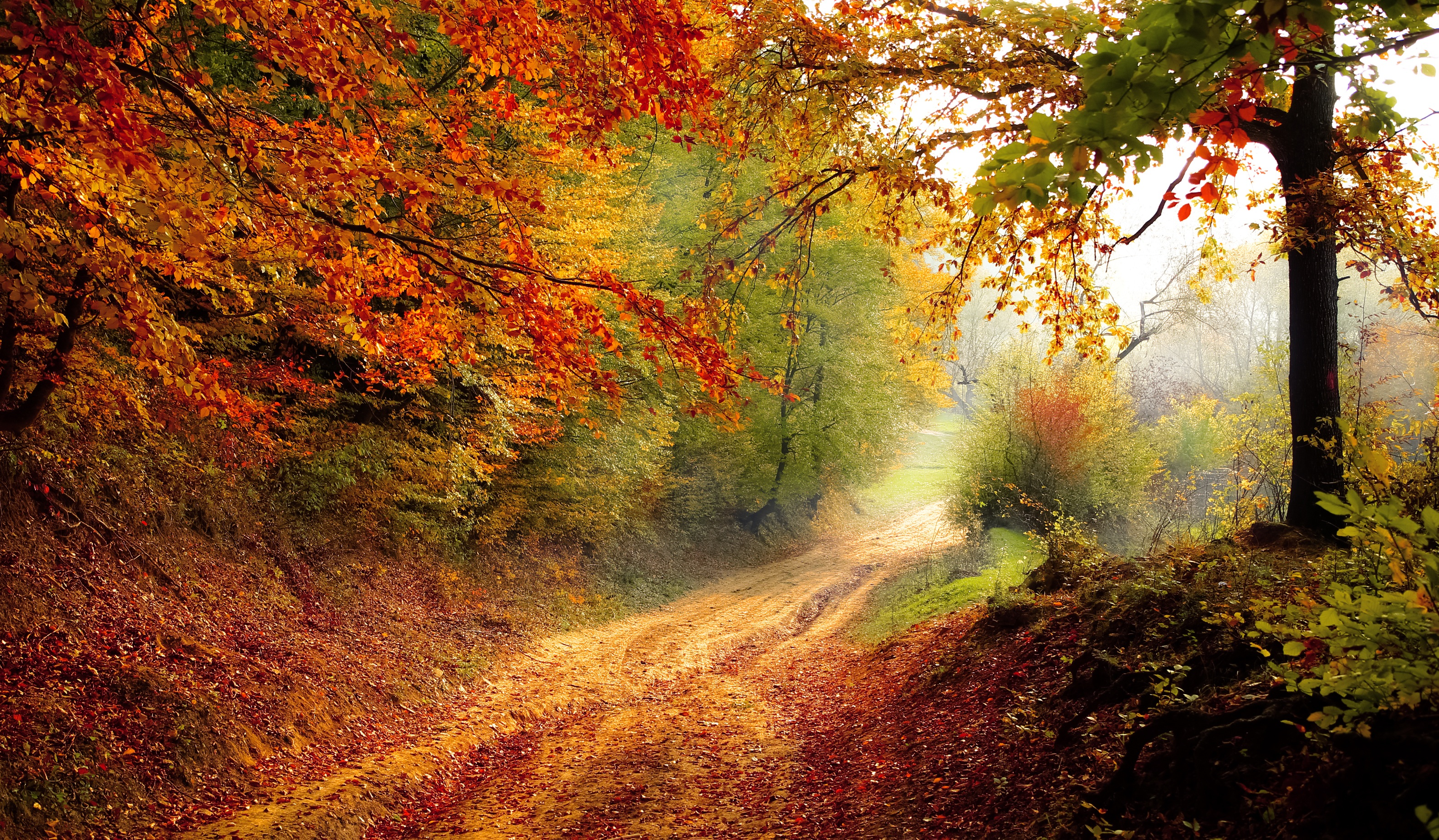 Wallpaper Autumn, Forest, Pathway, Fooliage, HD, Nature, #3830