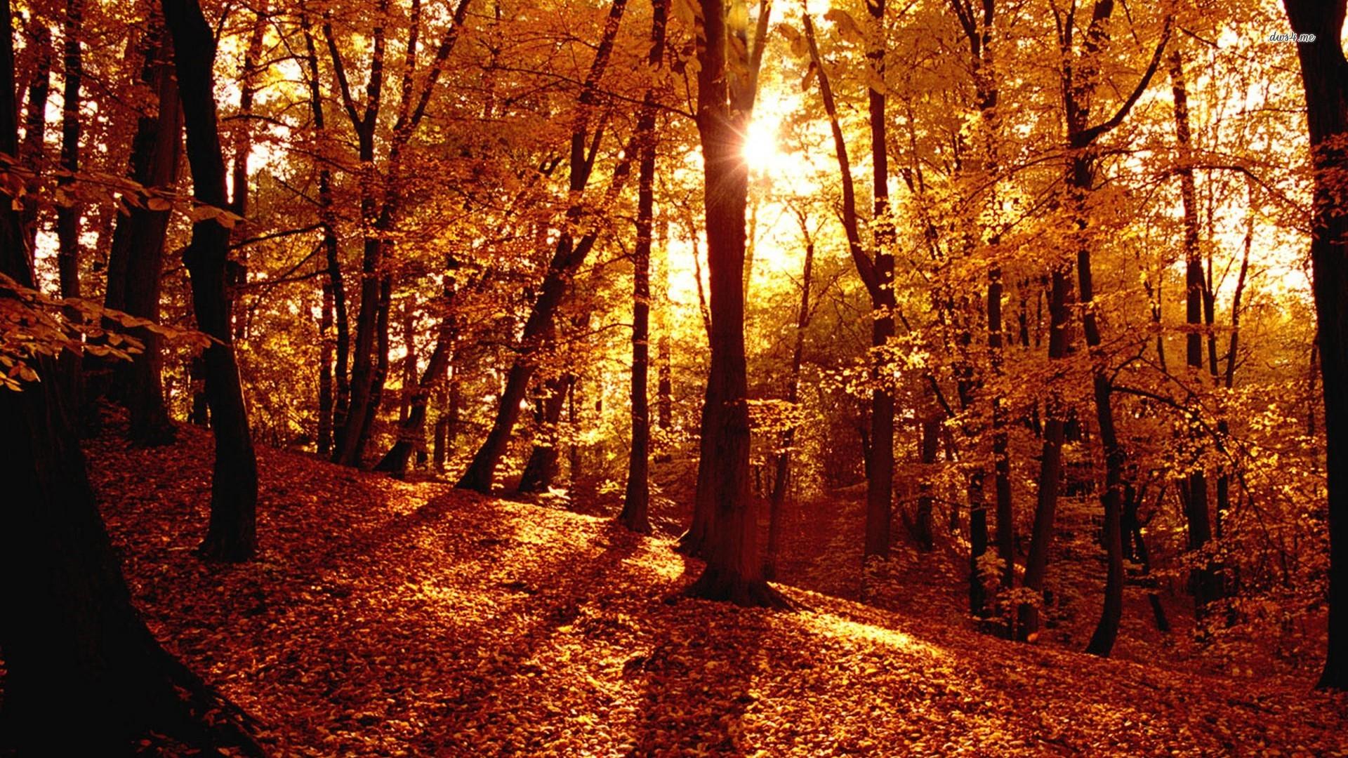 100% HDQ Autumn Forest Wallpapers | Desktop 4K HD Backgrounds