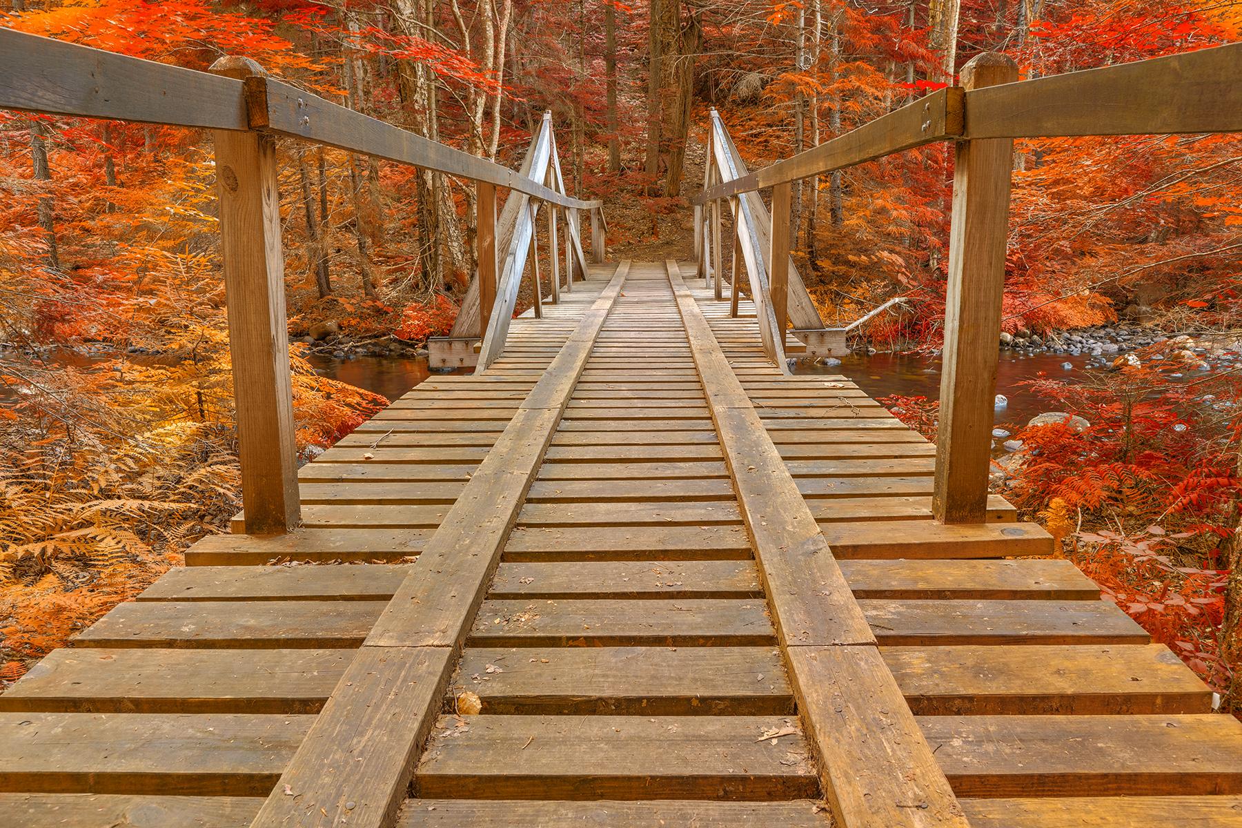 Autumn forest track bridge - hdr photo
