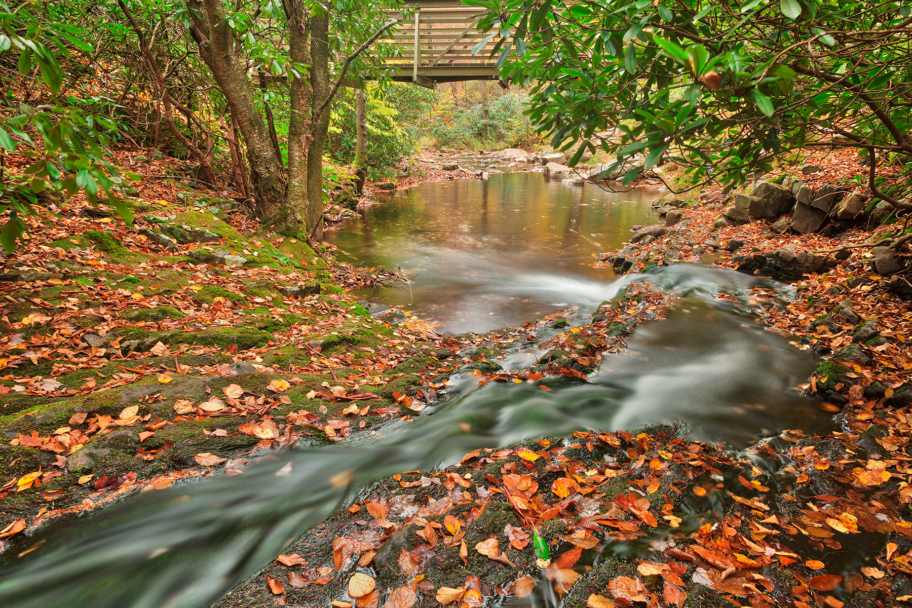 Autumn Hawk Stream - HDR, Adventure, Railings, Serene, Scenic, HQ Photo