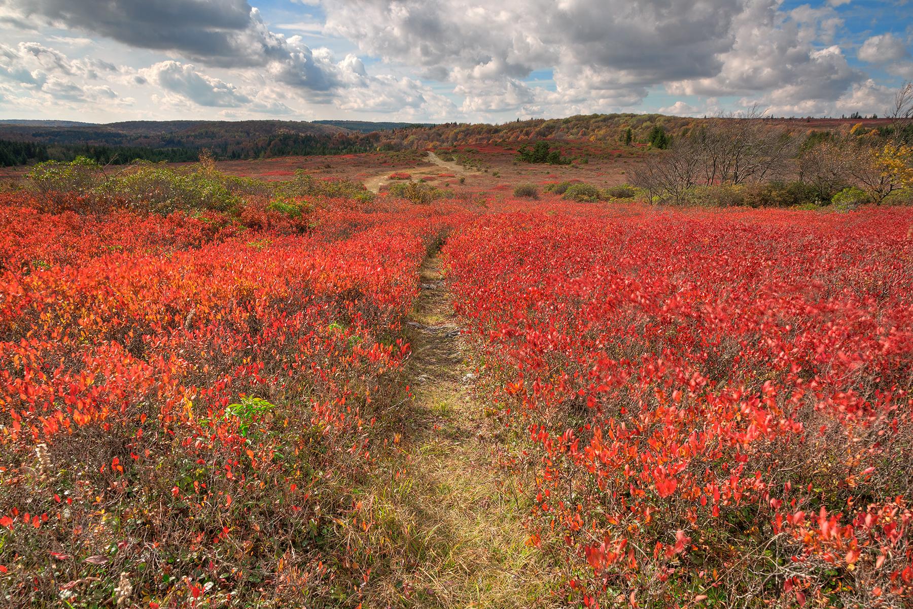 Autumn Huckleberry Trail - HDR, America, Park, Scene, Red, HQ Photo