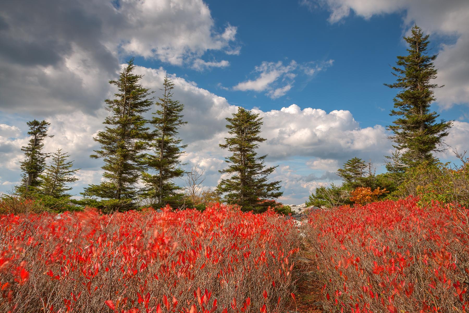 Autumn Huckleberry Wonderland - HDR, , Perspective, Scene, Rocky, HQ Photo