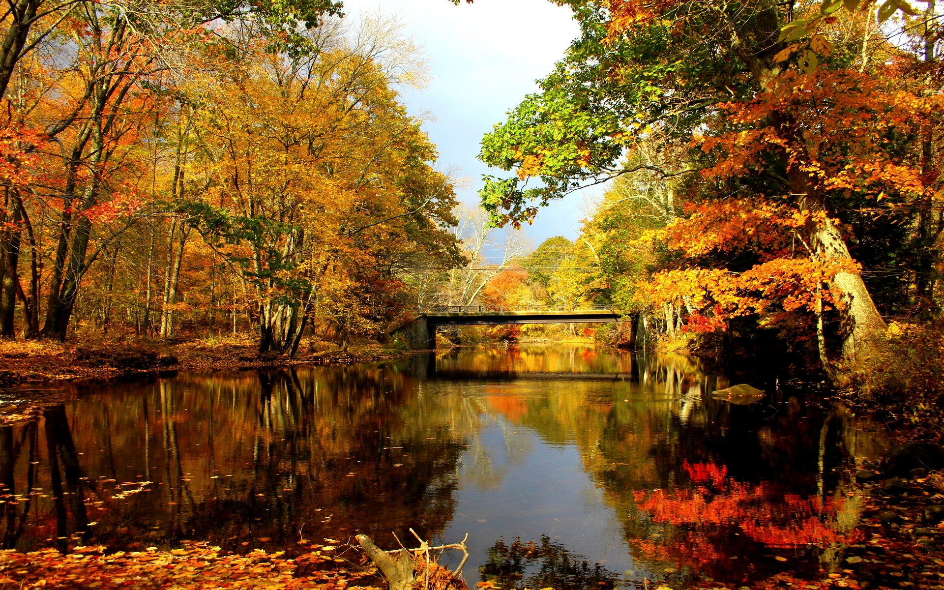 Climate-warmed leaves change lake ecosystems (Constantine ...