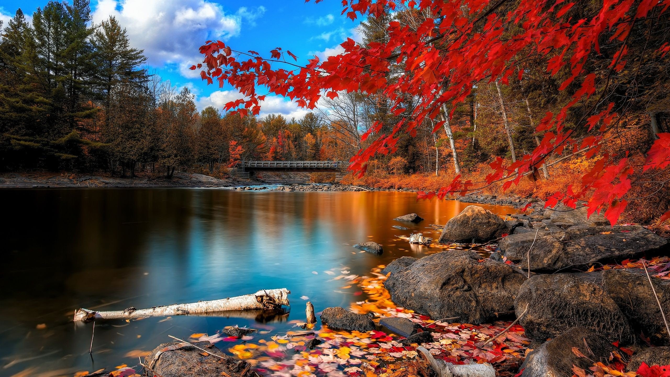 Lakes: Lake Tree Landscape Nature Autumn Forest Woods Hd Wallpaper ...