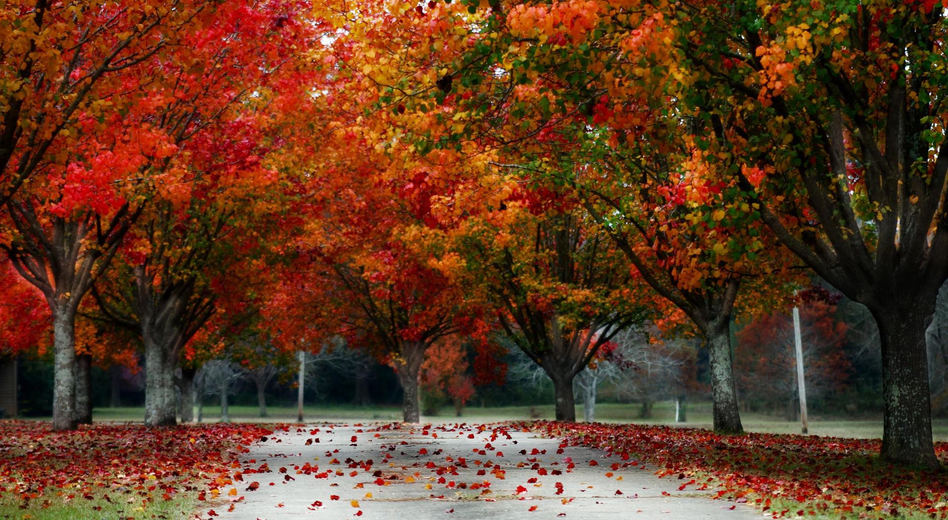 Autumn landscapes 52552 - Autumn Theme - Landscape scenery