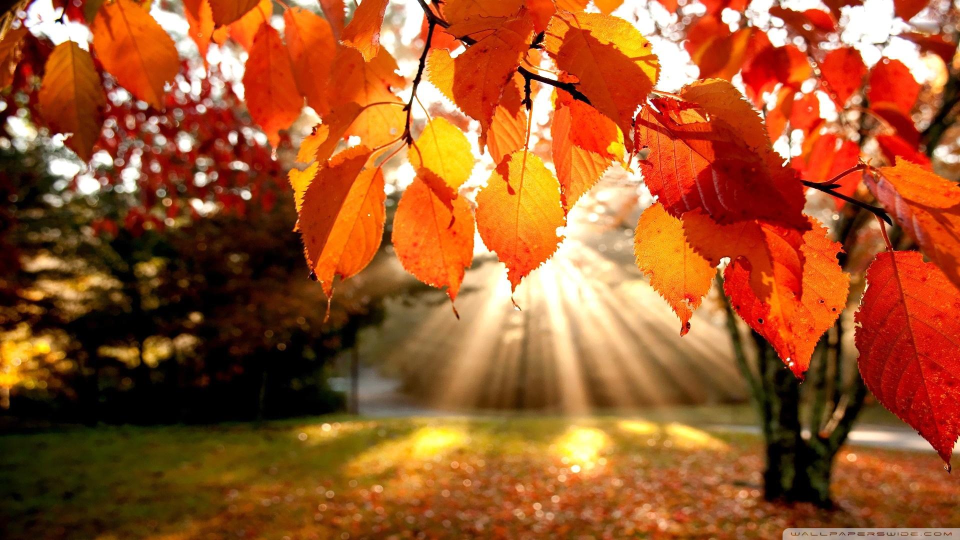 Free Photo Autumn Landscape Autumn Branches Landscape Free