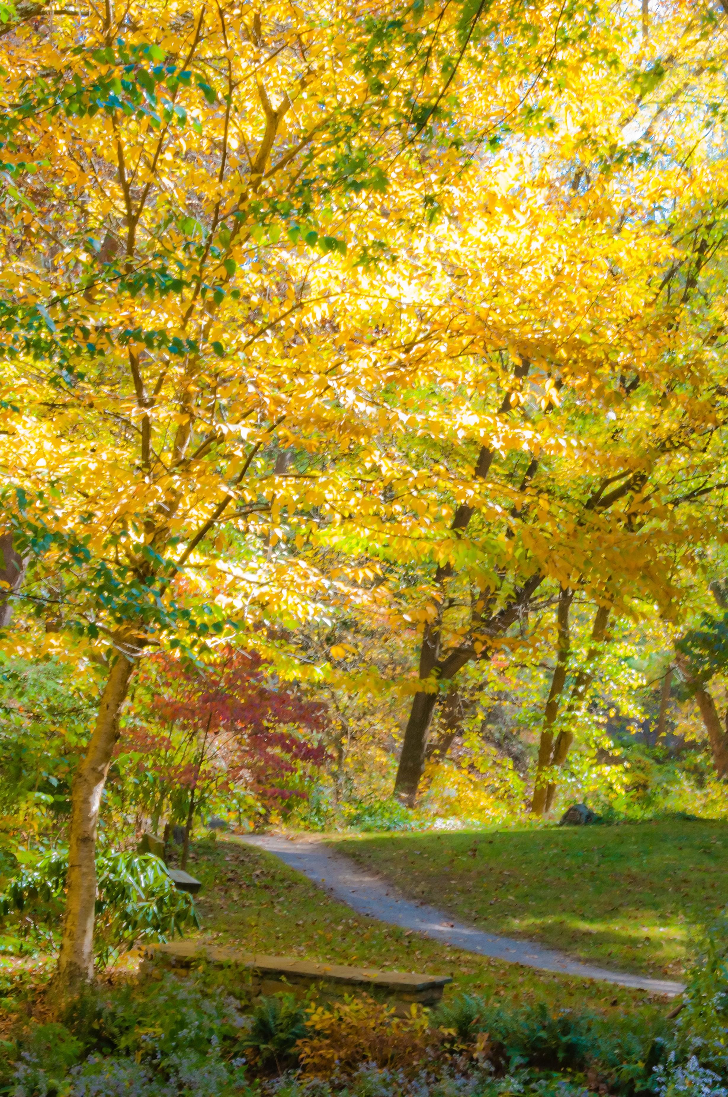 Autumn landscape, Peaceful, Oak, October, Orange, HQ Photo