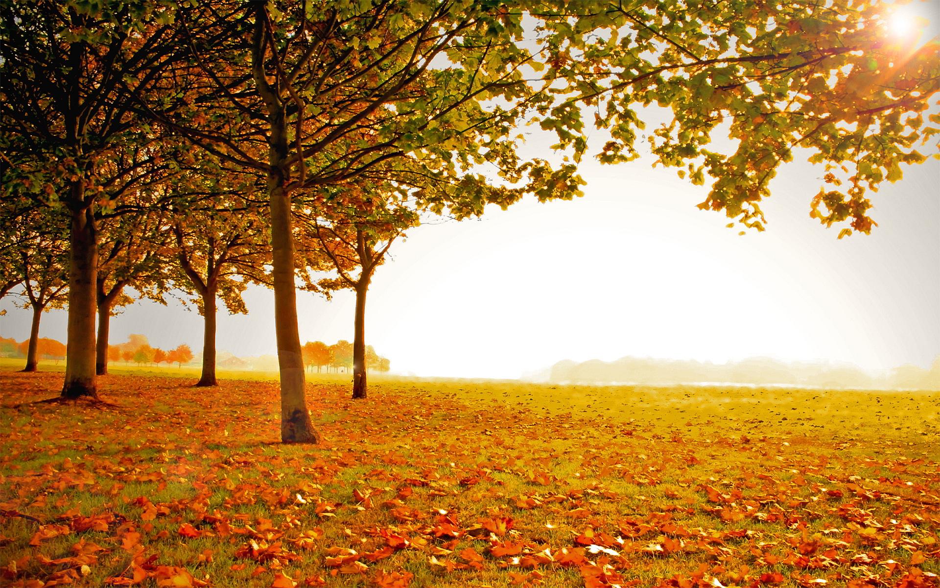 HD Autumn Landscape Wallpaper 5 - HD Wallpapers - Desktop ...