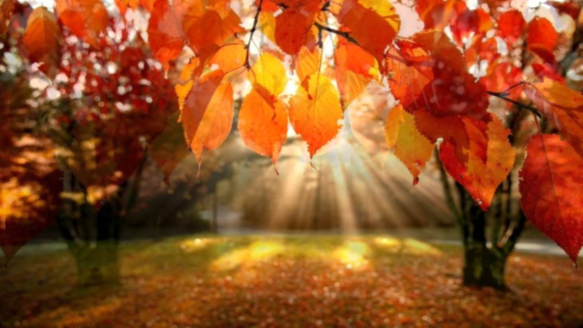 Red leaves - Autumn trees - Autumn leaves - YouTube
