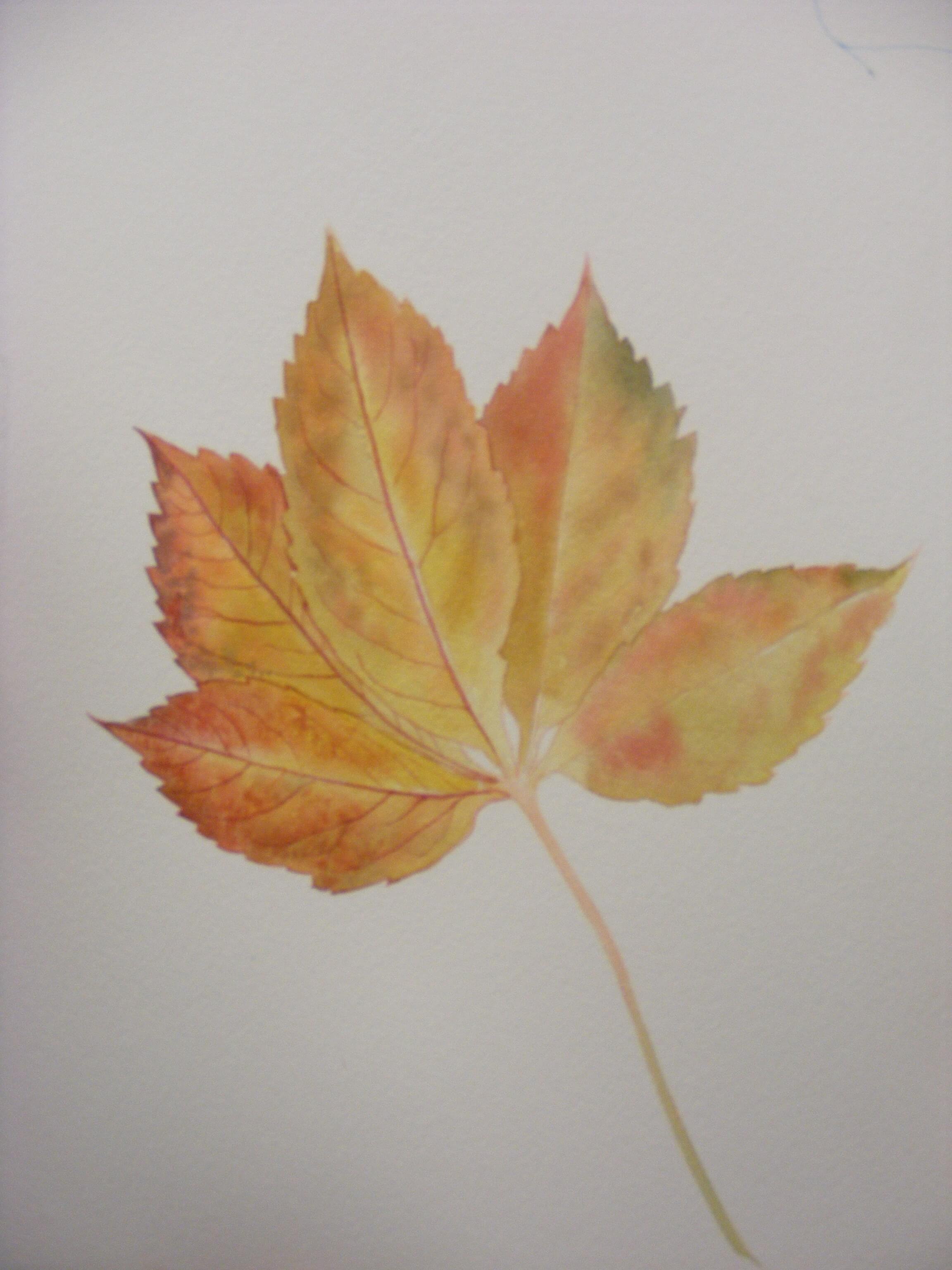 Autumn leaf Jenny Neale - Charnwood Drawing and Painting Club