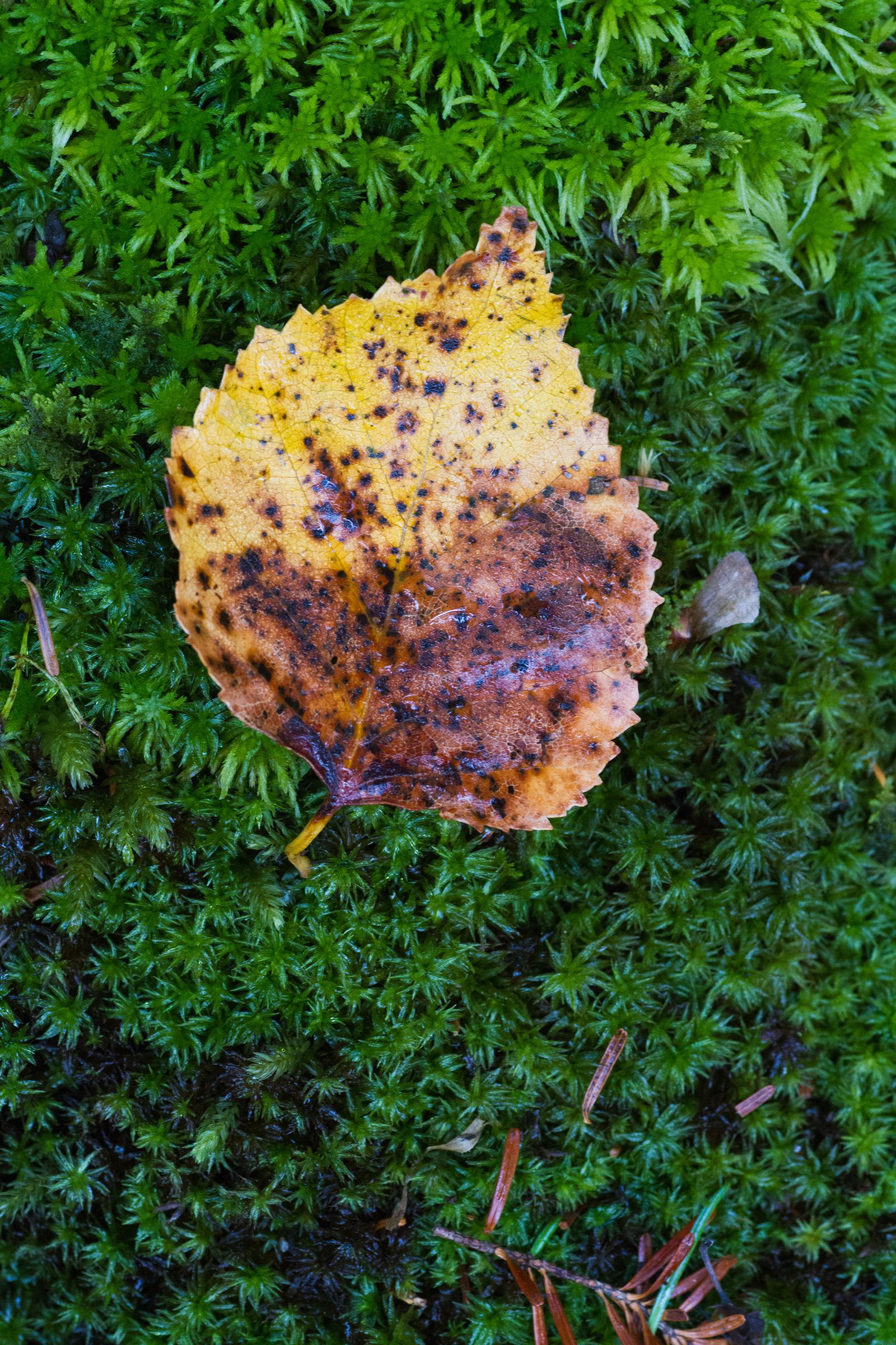 Autumn leaf, Autumn, Rug, November, October, HQ Photo