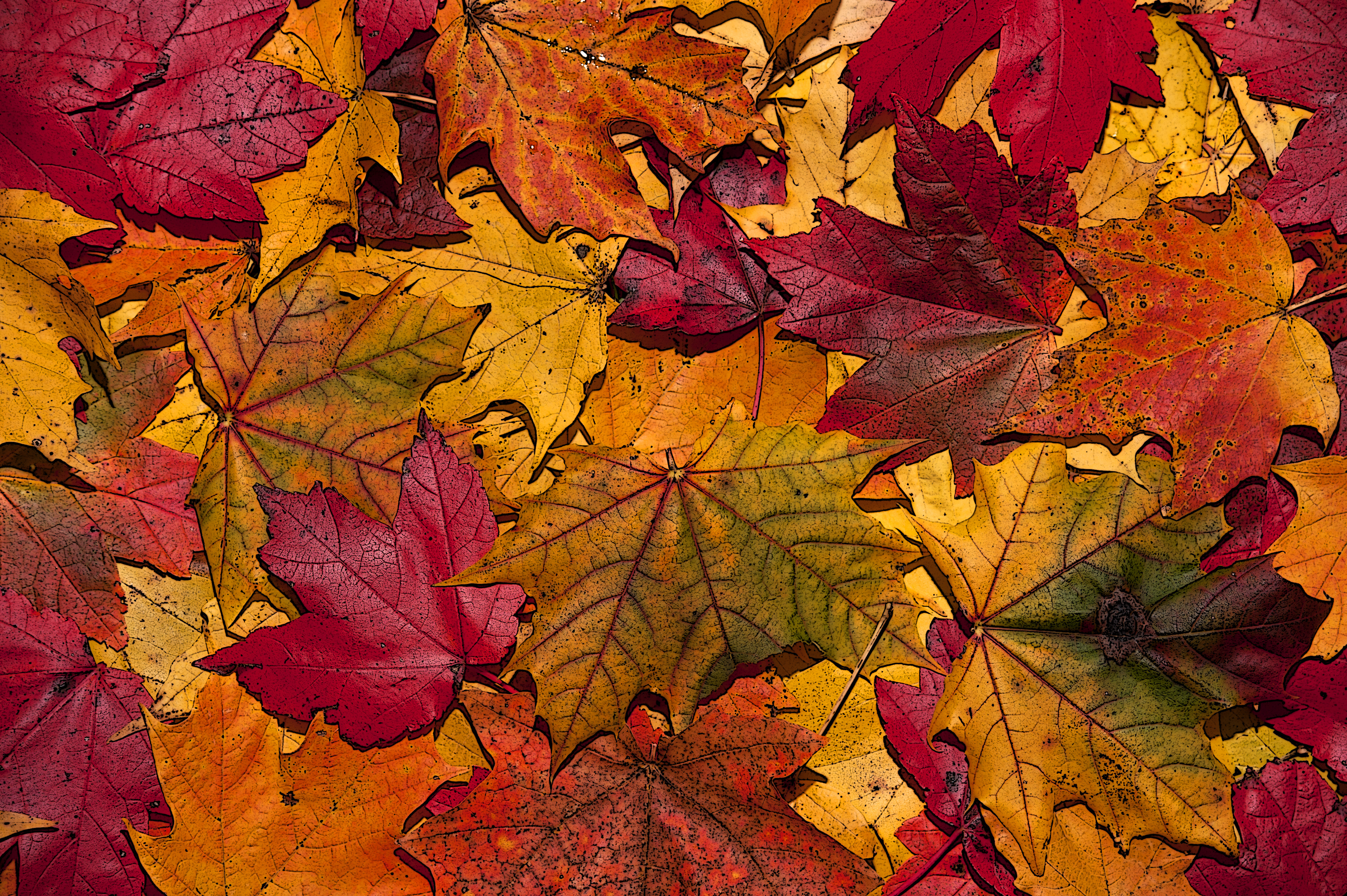 October leaves photo