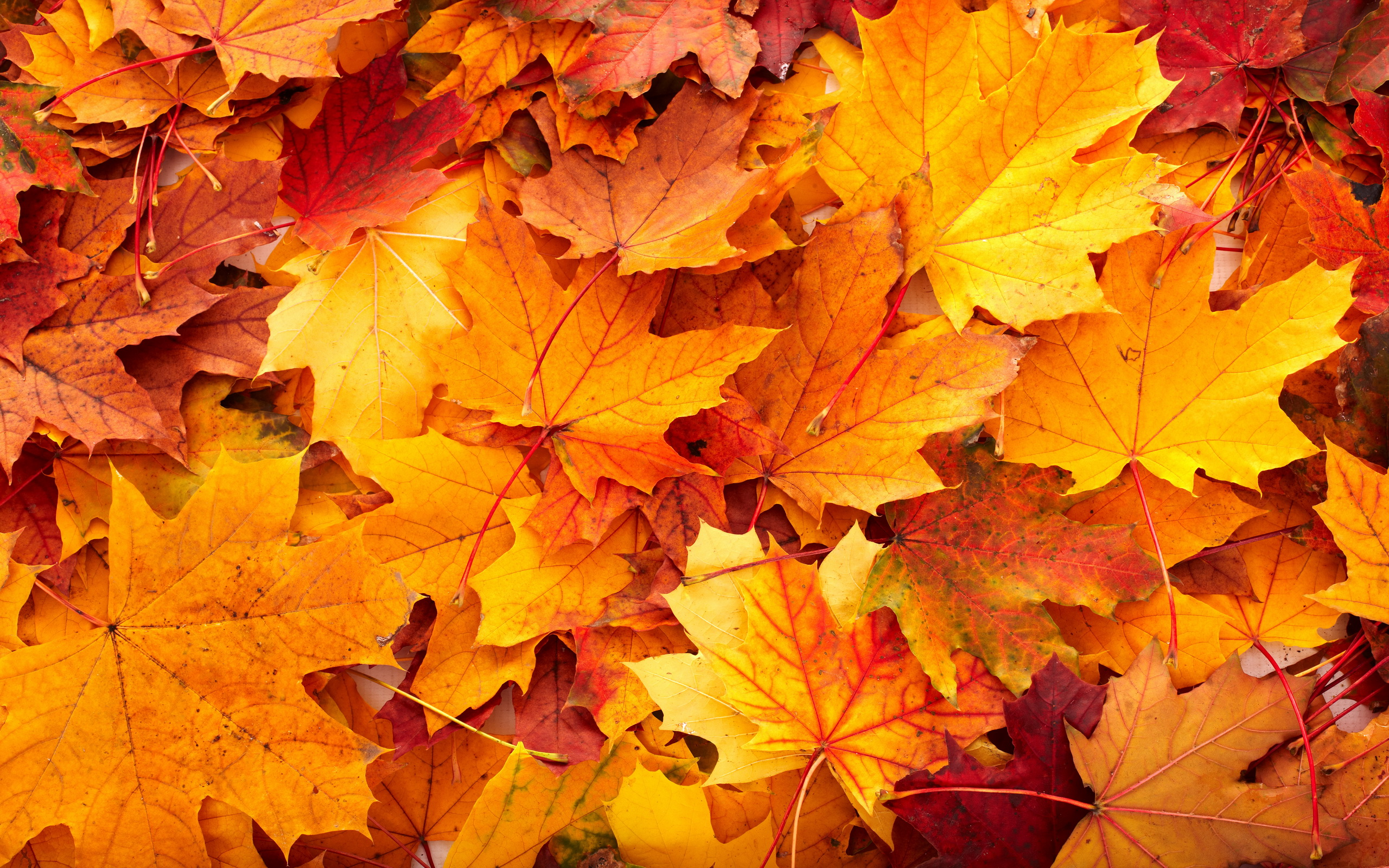 Autumn Leaves Tumb HD Wallpaper, Background Images