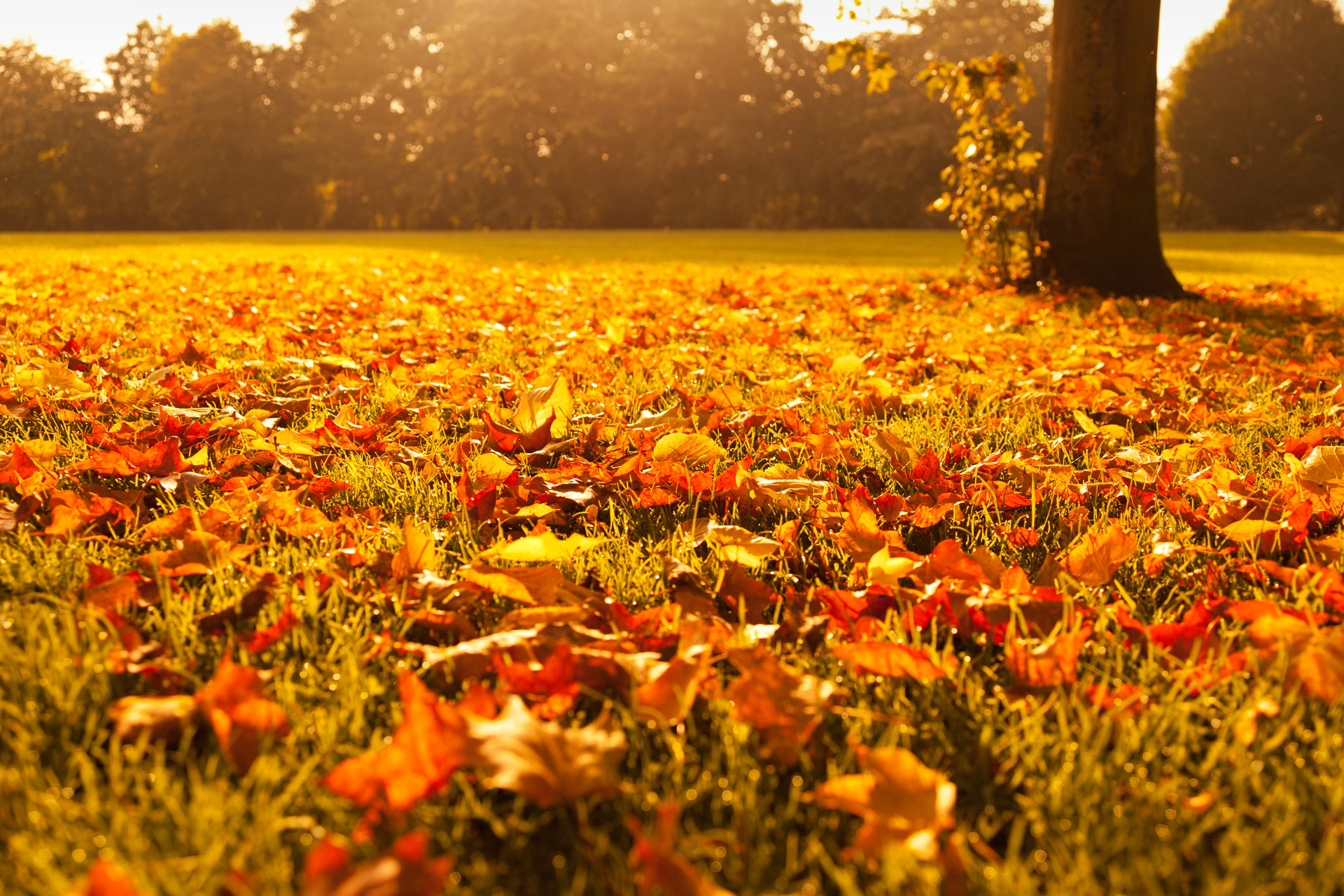 Autumn Leaves At Sunset Free Stock Photo - Public Domain Pictures