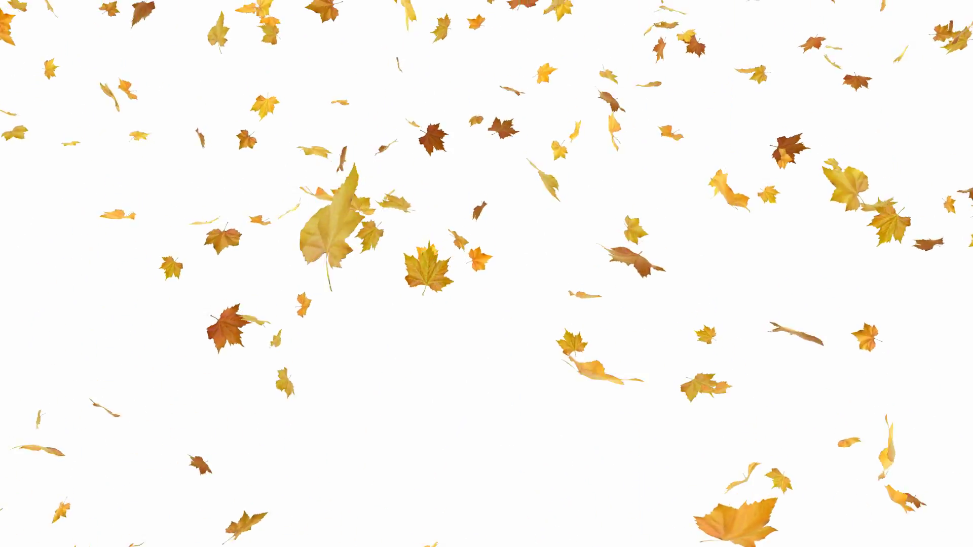 Falling autumn leaves - isolated and loopable Motion Background ...