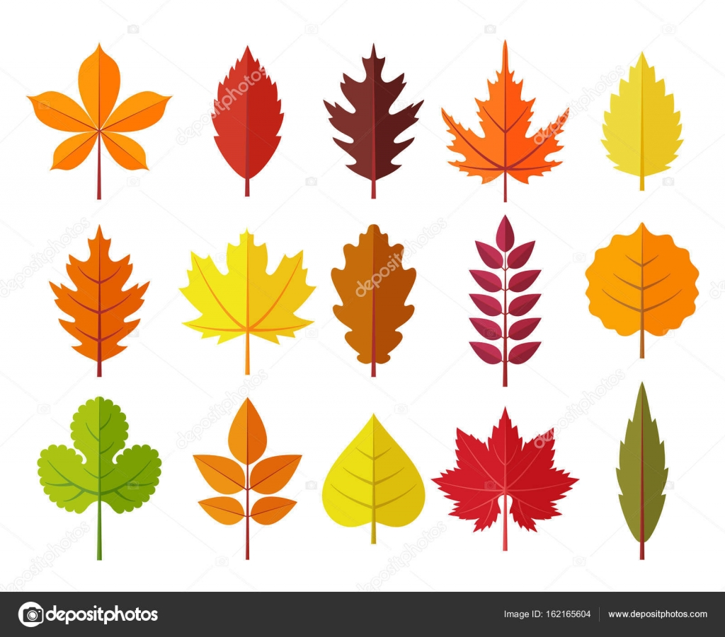 autumn leaves set, isolated on white background. simple cartoon flat ...