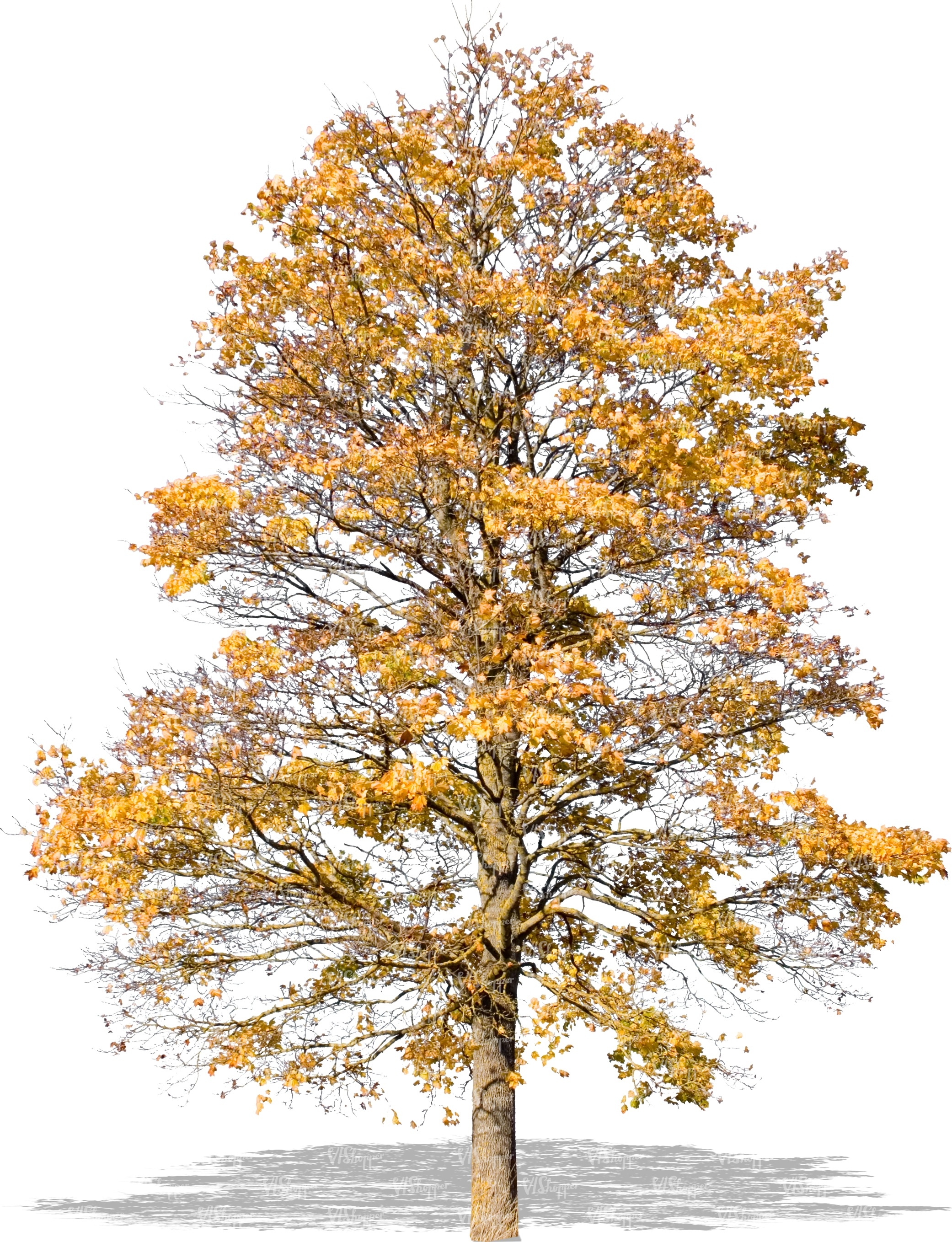 cut out tree with yellow autumn leaves - cut out trees and plants ...
