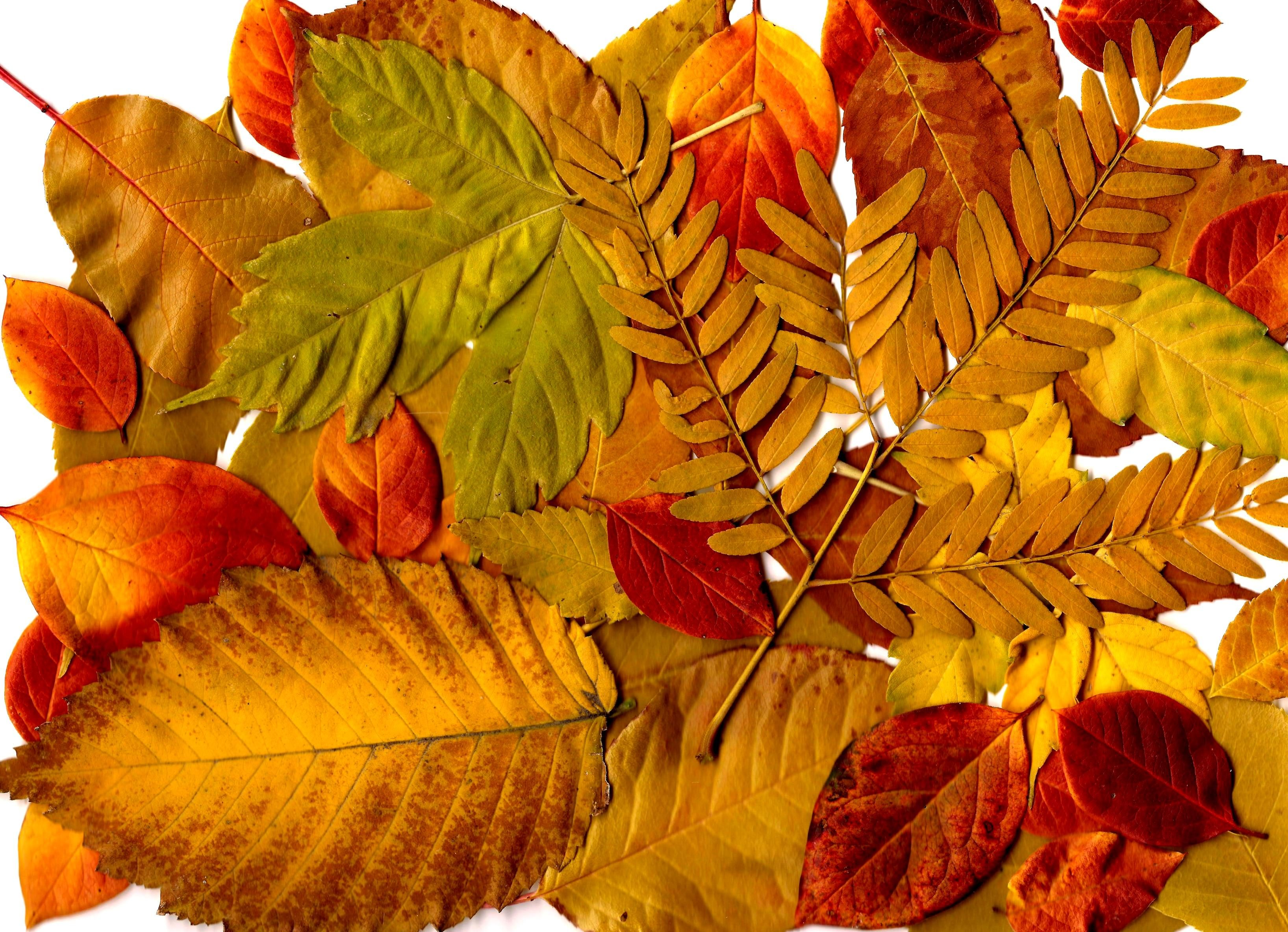 Free picture: autumn, leaves, collage