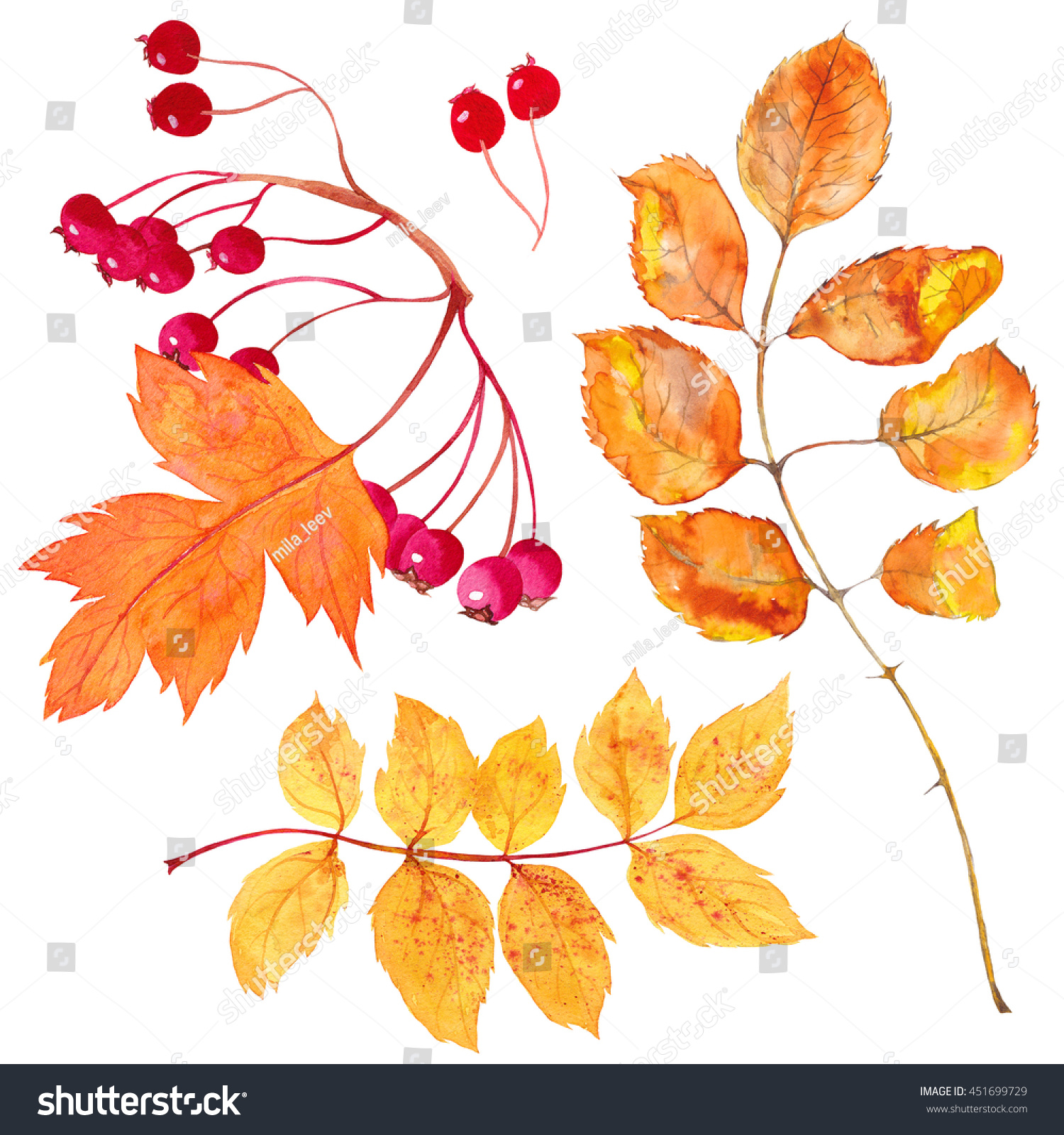 Watercolor Autumn Leaves Hawthorn Dead Branch Stock Illustration ...