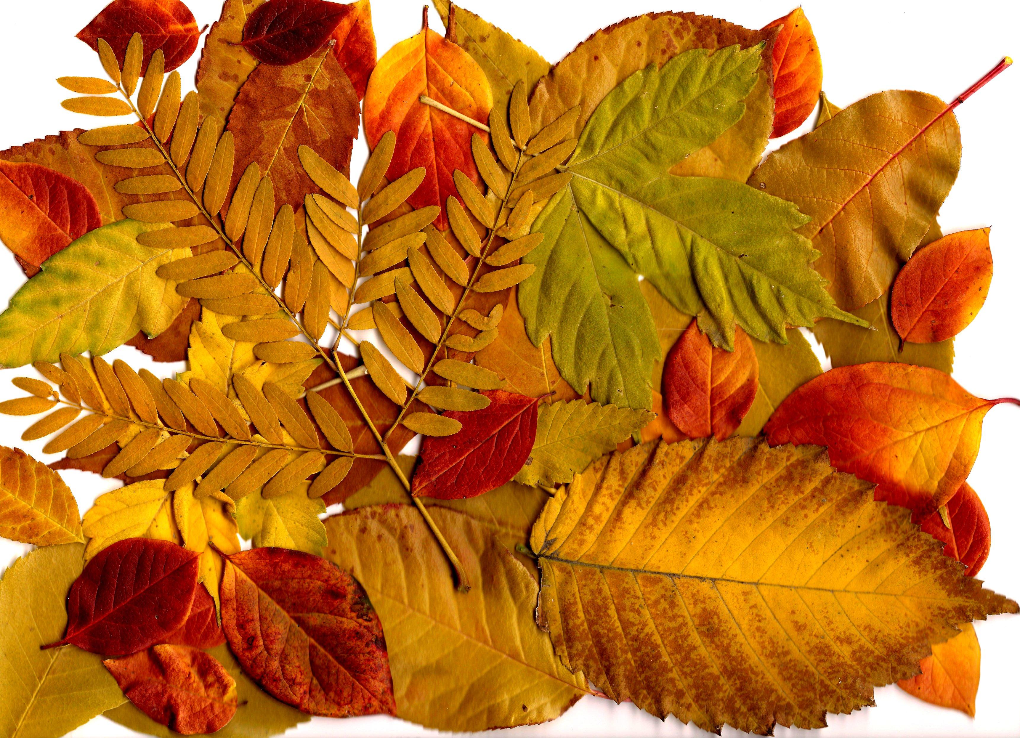 Autumn Leaves Collage Picture | Free Photograph | Photos Public Domain