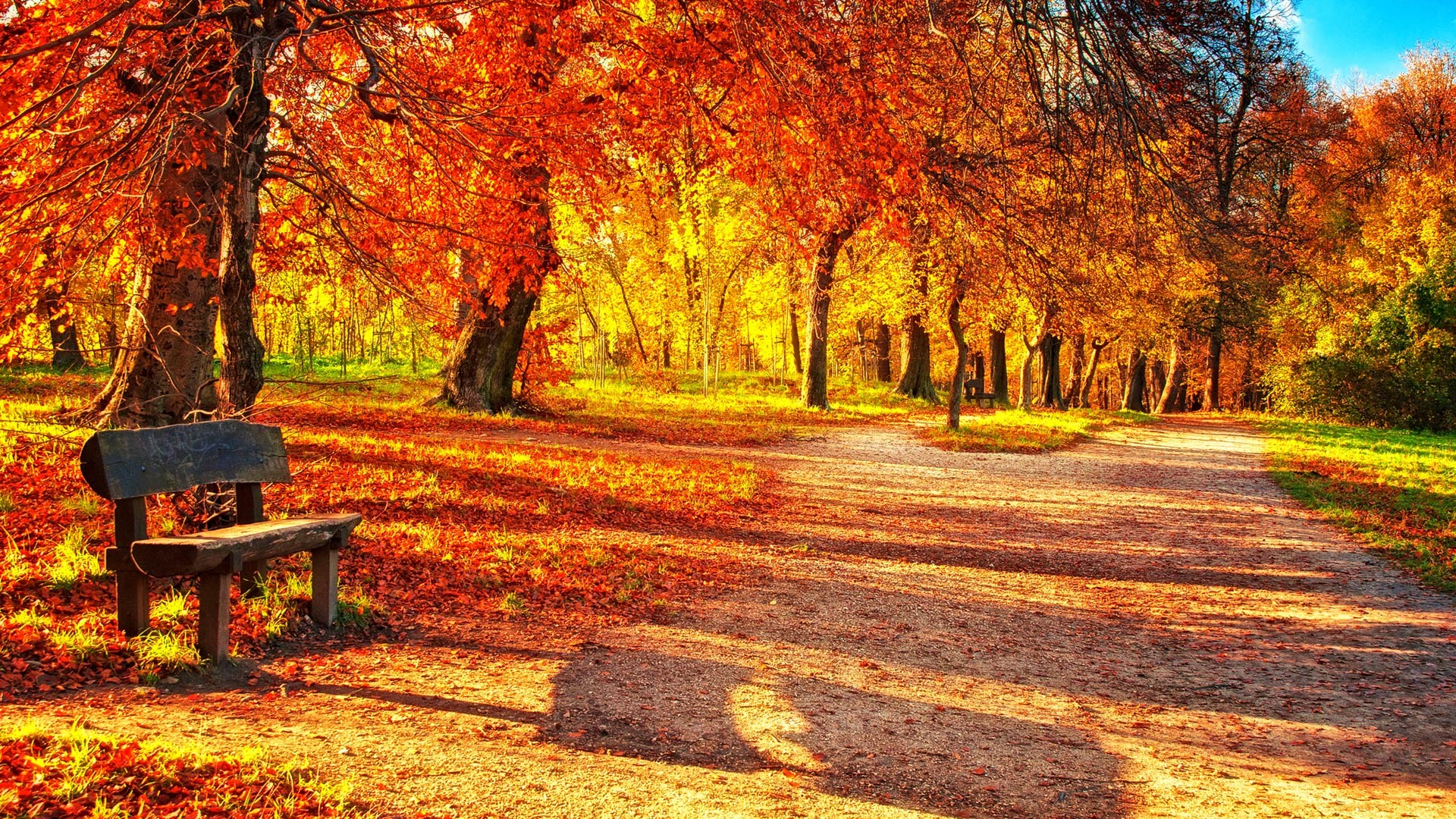 AUTUMN LEAVES WALLPAPERS - HD Wallpapers and Pictures