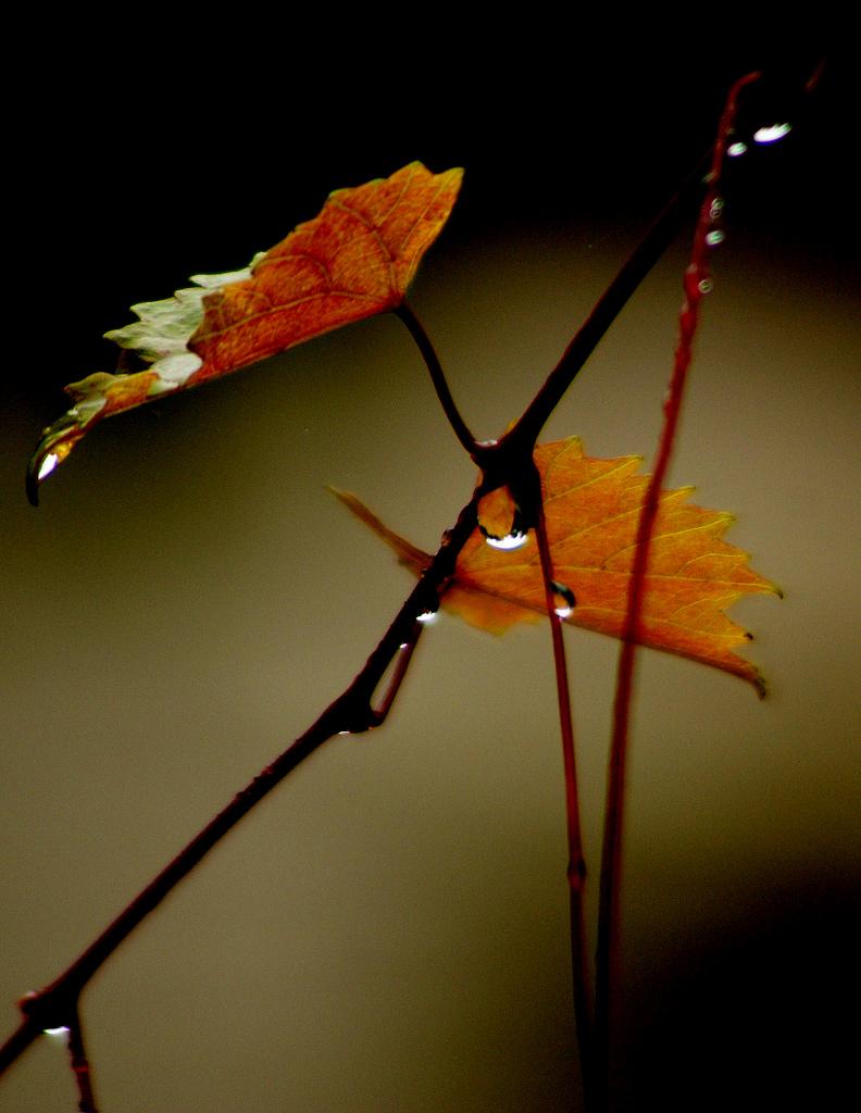 Autumn Leaves, Autumn, Fall, Leaf, Leaves, HQ Photo