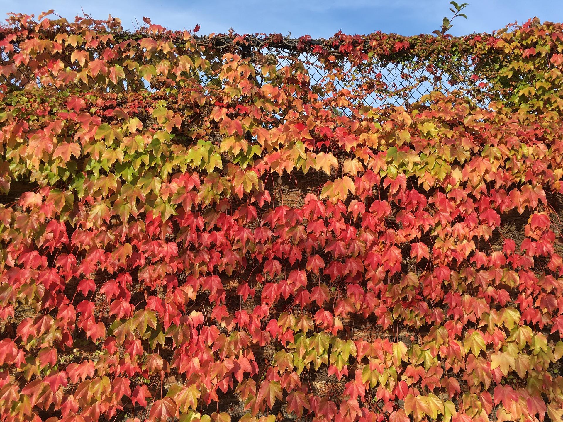 Autumn Leaves, Autumn, Dry, Fall, Fallen, HQ Photo
