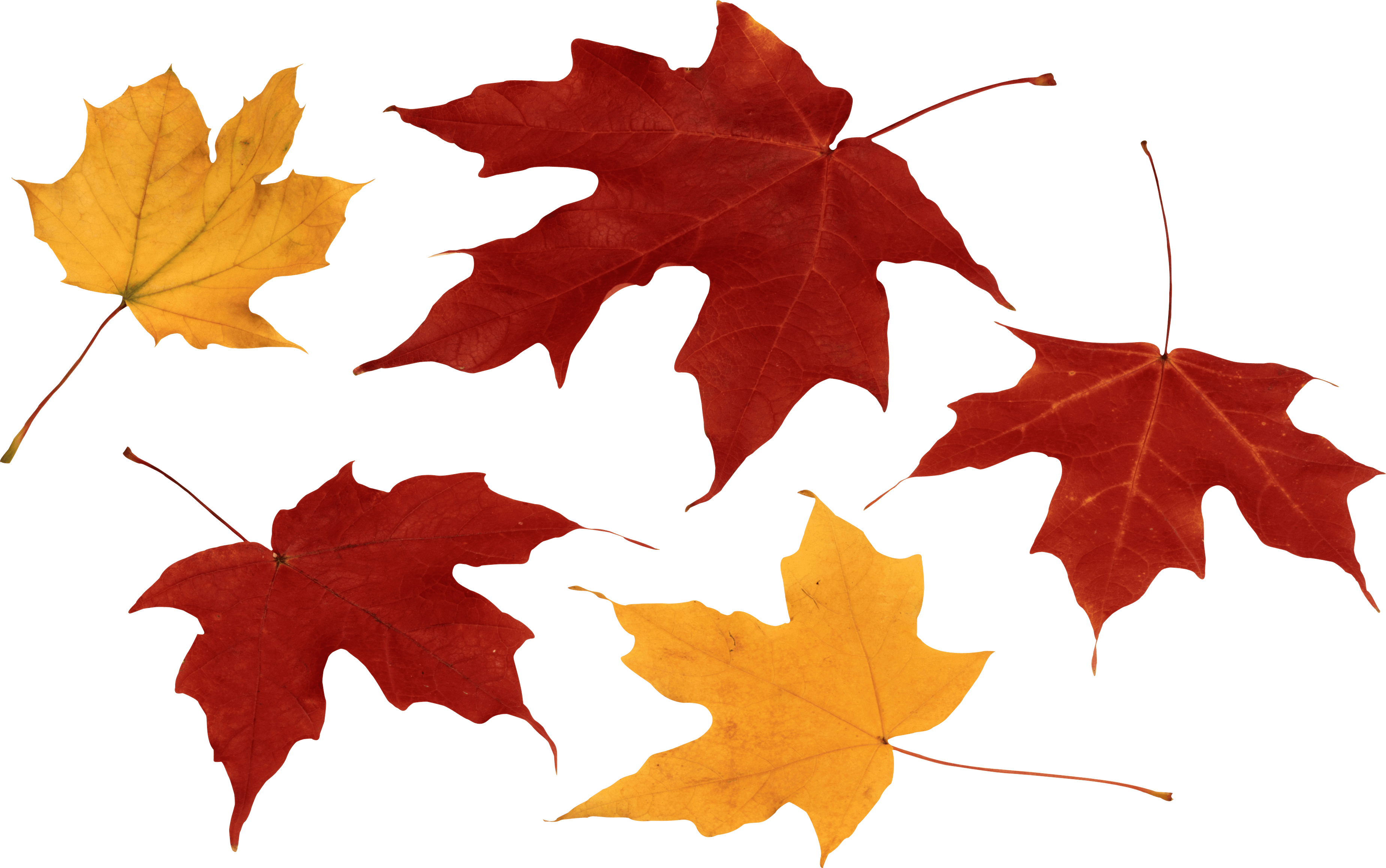 Autumn Leaves | PNG Mart
