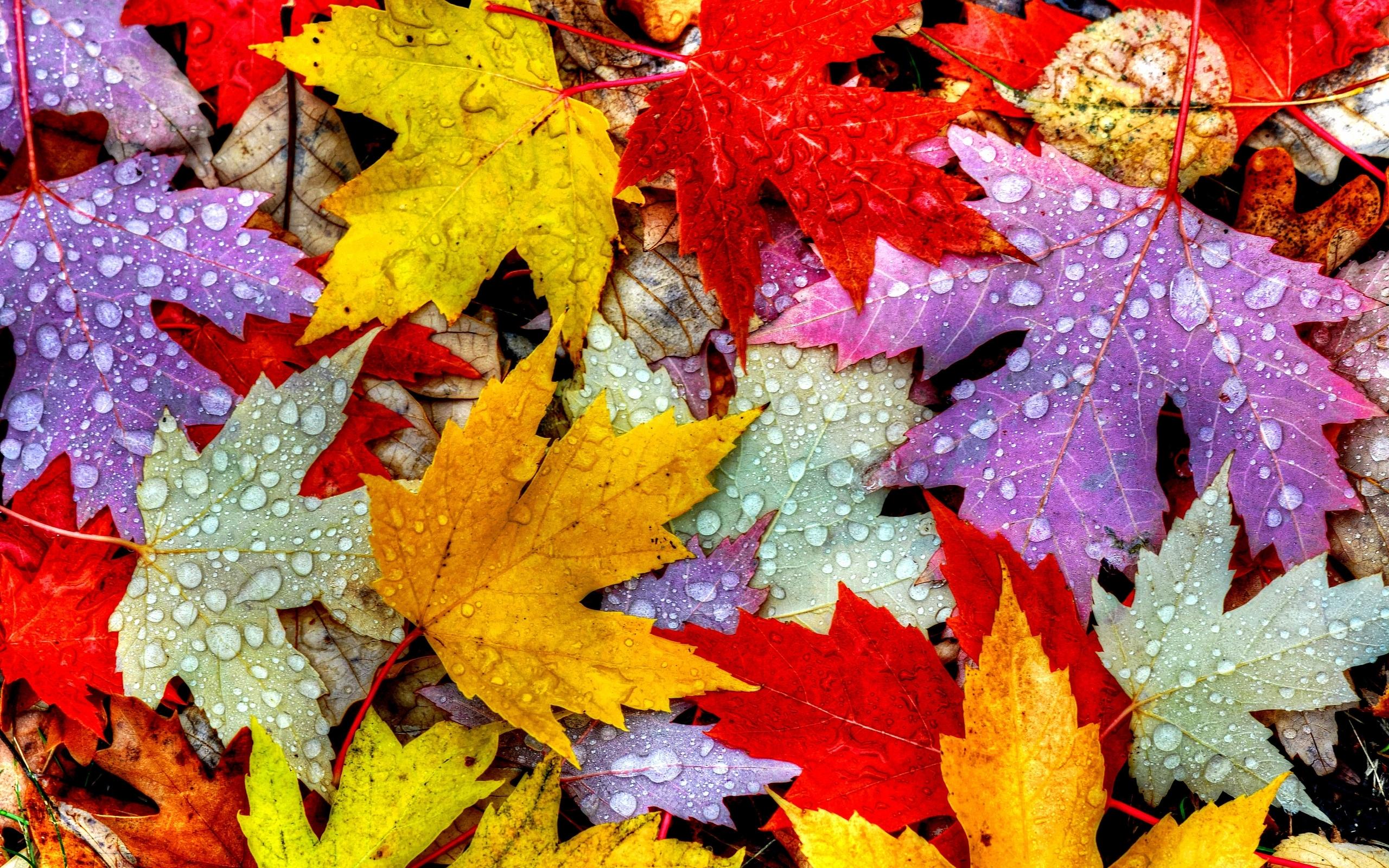 240x320 Nature Autumn Leaves Nokia 230, Nokia 215, Samsung Xcover ...