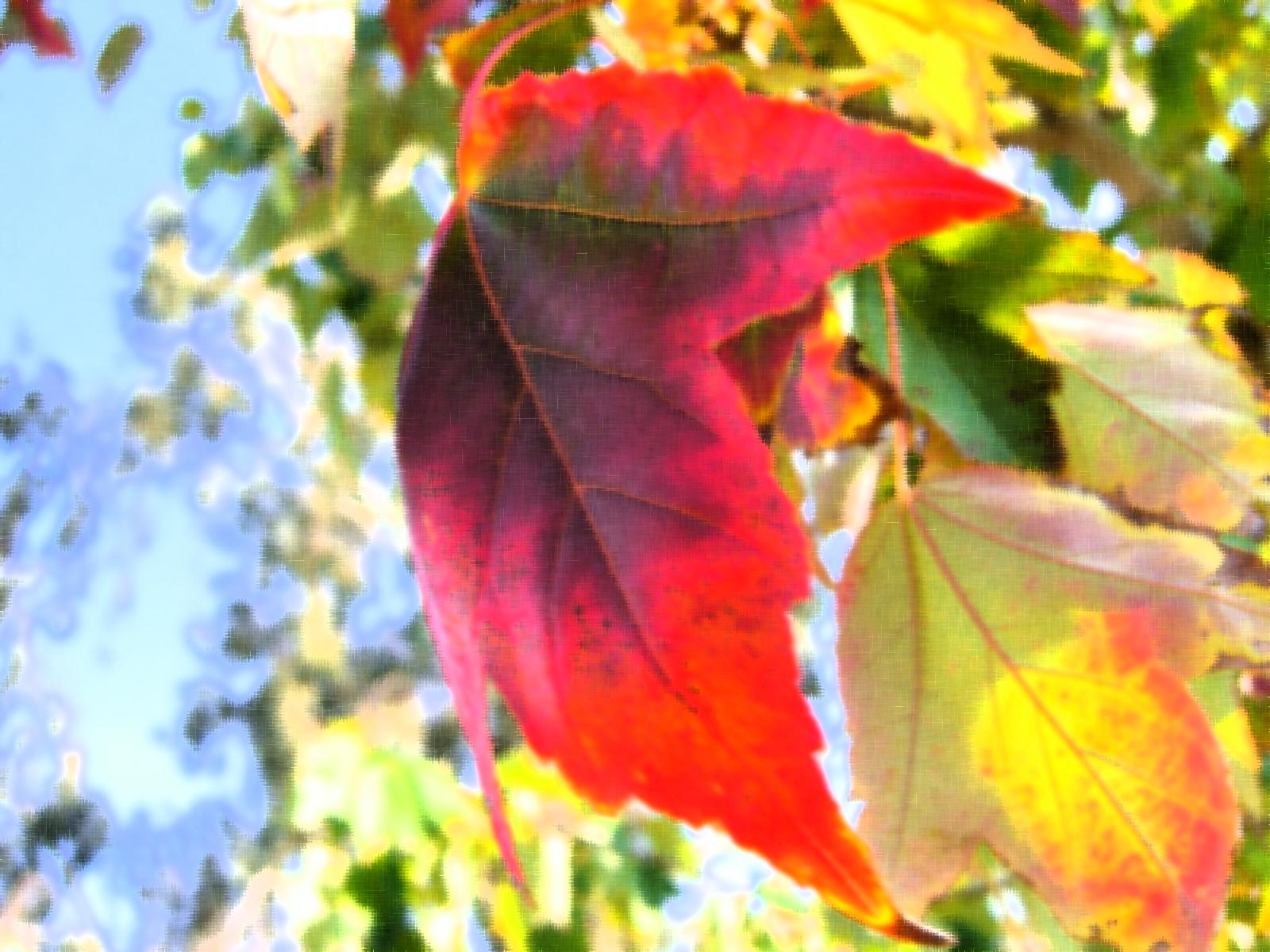 Autumn Leaves, Artwork, Autumn, Brown, Bspo06, HQ Photo